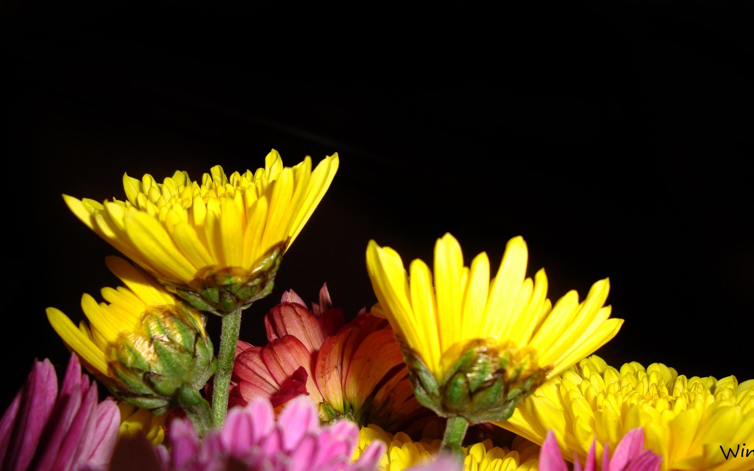 3840 скачать обои Растения, Цветы - заставки и картинки бесплатно