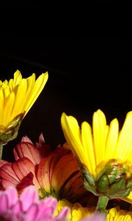 3840 descargar fondo de pantalla Plantas, Flores: protectores de pantalla e imágenes gratis
