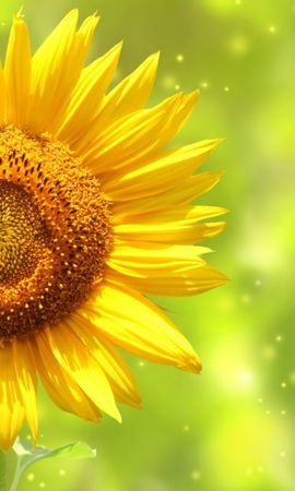 26228 скачать обои Растения, Цветы, Фон, Подсолнухи - заставки и картинки бесплатно