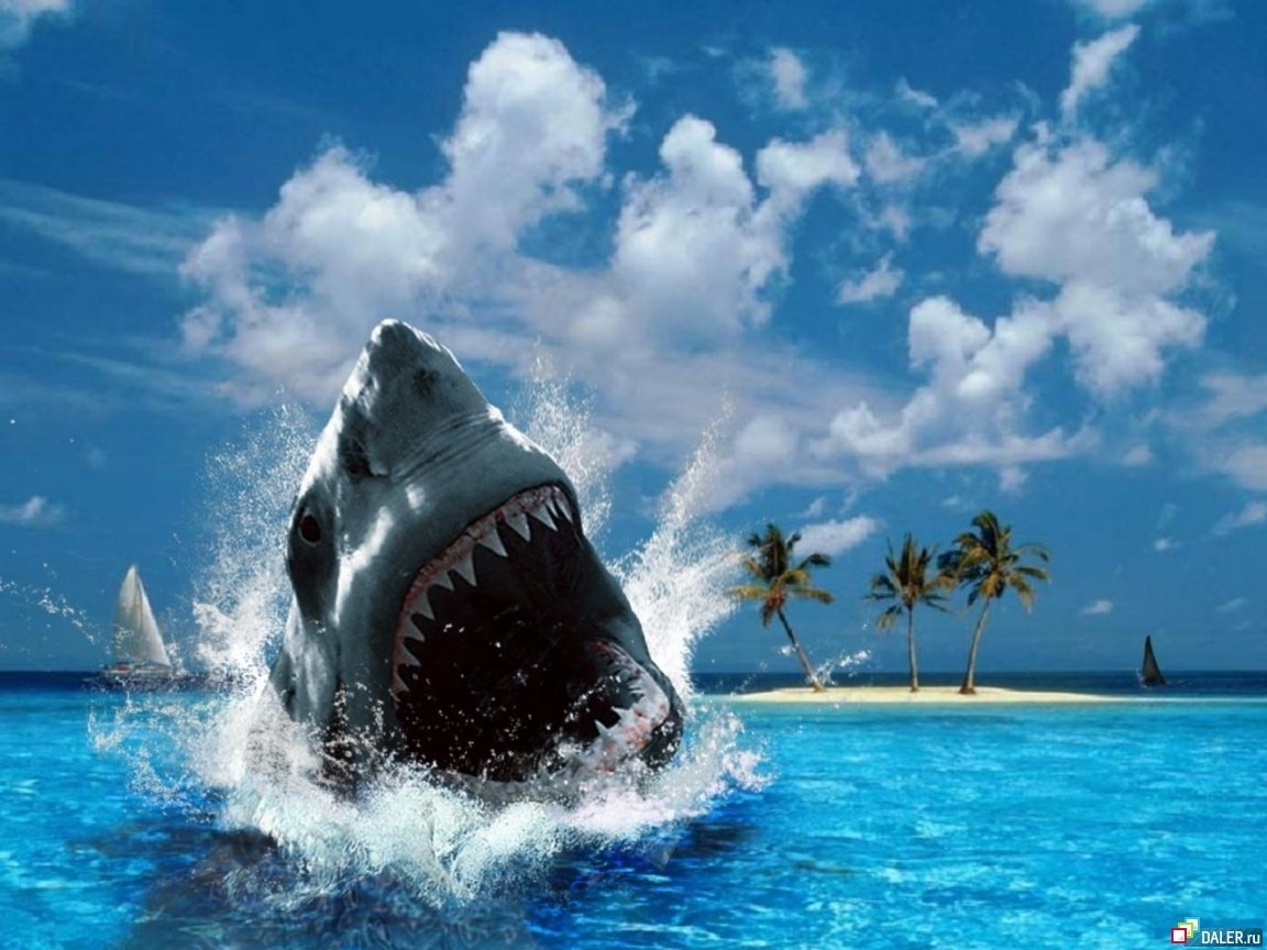 Download mobile wallpaper Sharks, Water, Animals, Sea for free.