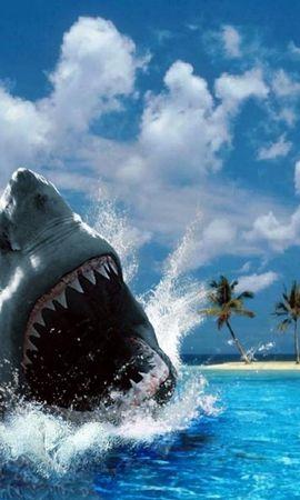 8149 baixar papel de parede Animais, Água, Mar, Sharks - protetores de tela e imagens gratuitamente