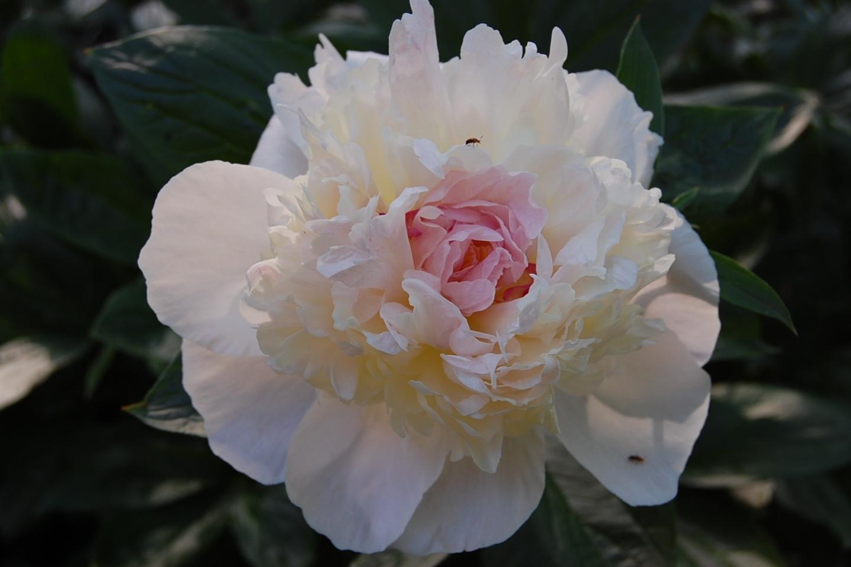 3615 скачать обои Растения, Цветы - заставки и картинки бесплатно
