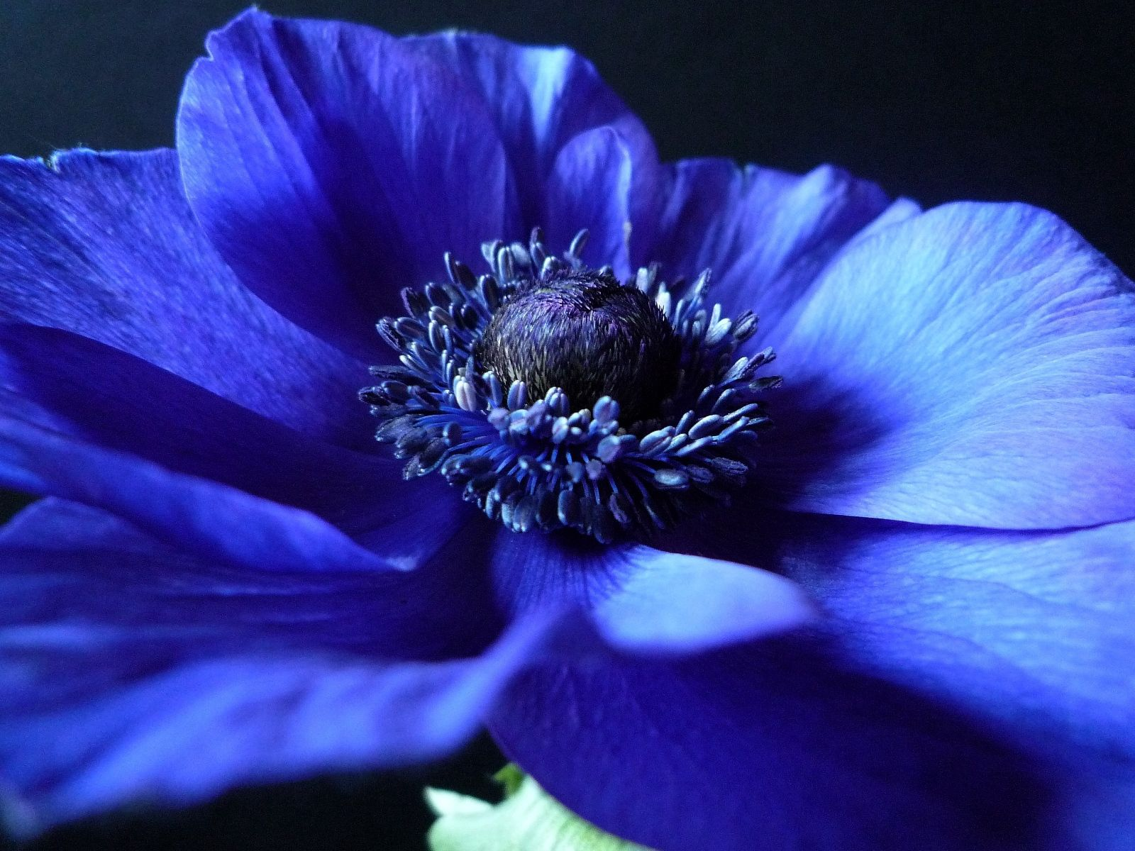53077 Screensavers and Wallpapers Petals for phone. Download Background, Flower, Macro, Dark, Petals pictures for free