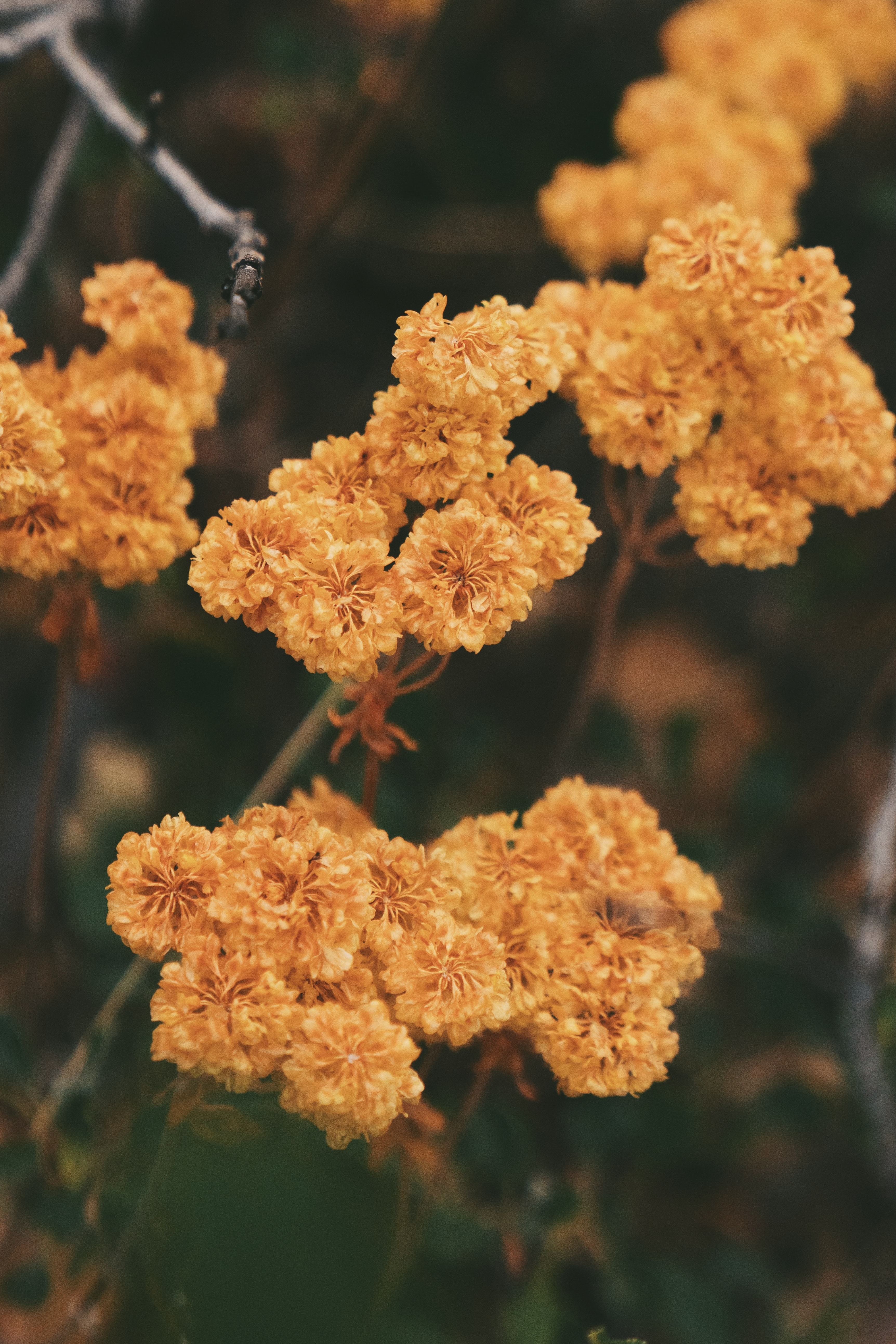 111805 download wallpaper Flowers, Dried Flowers, Dry Flowers, Autumn, Dry screensavers and pictures for free
