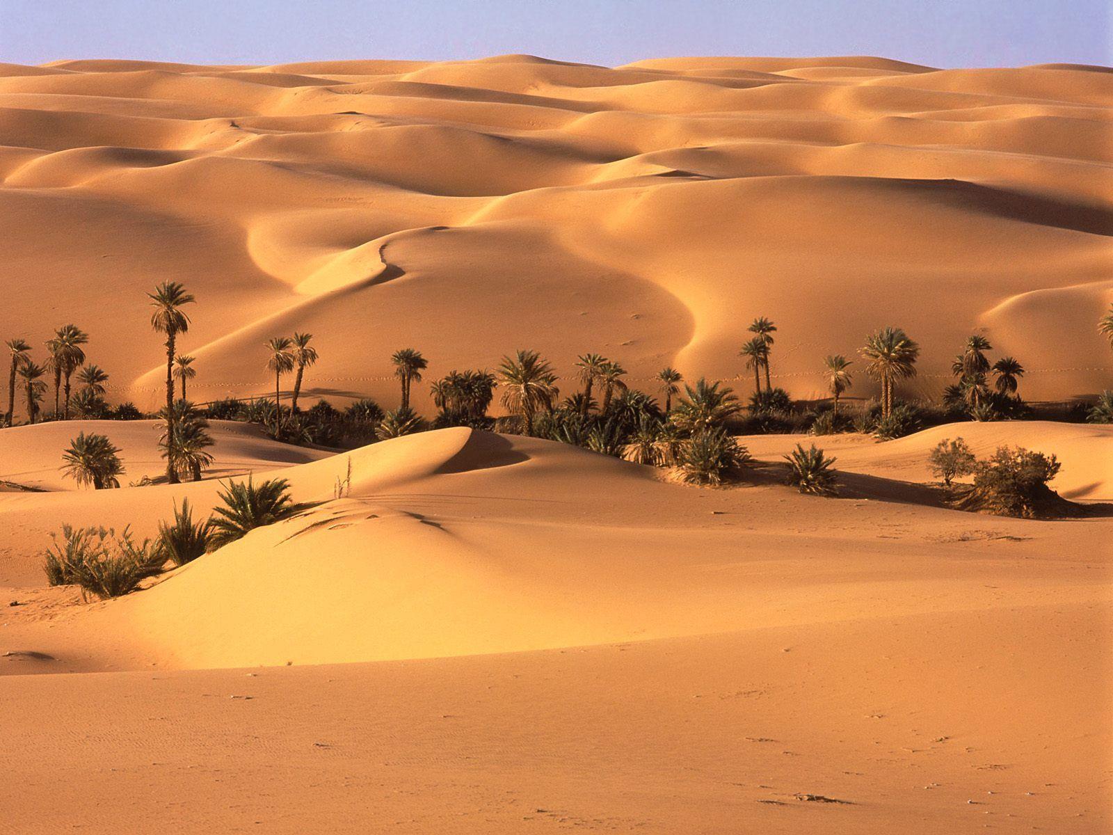 87785 Заставки и Обои Песок на телефон. Скачать Песок, Пальмы, Природа, Деревья, Пустыня, Растительность, Оазис картинки бесплатно