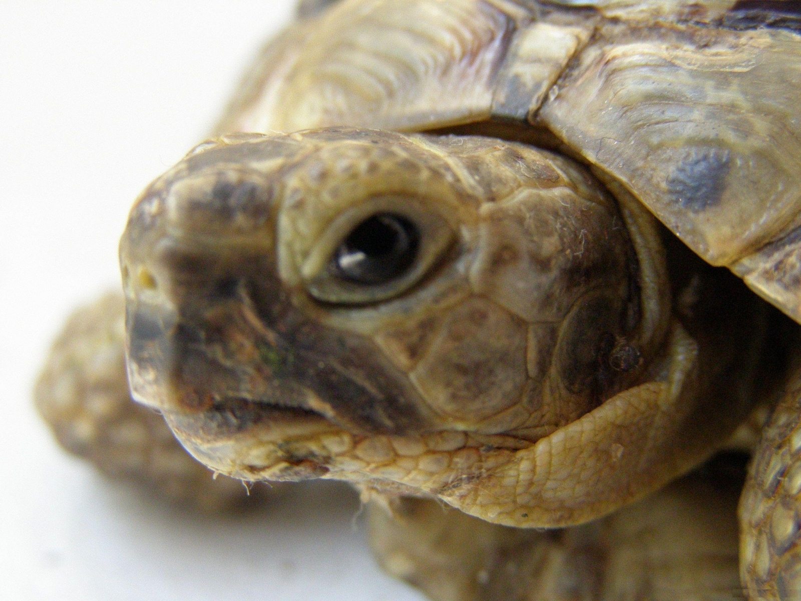 8037 download wallpaper Animals, Turtles screensavers and pictures for free