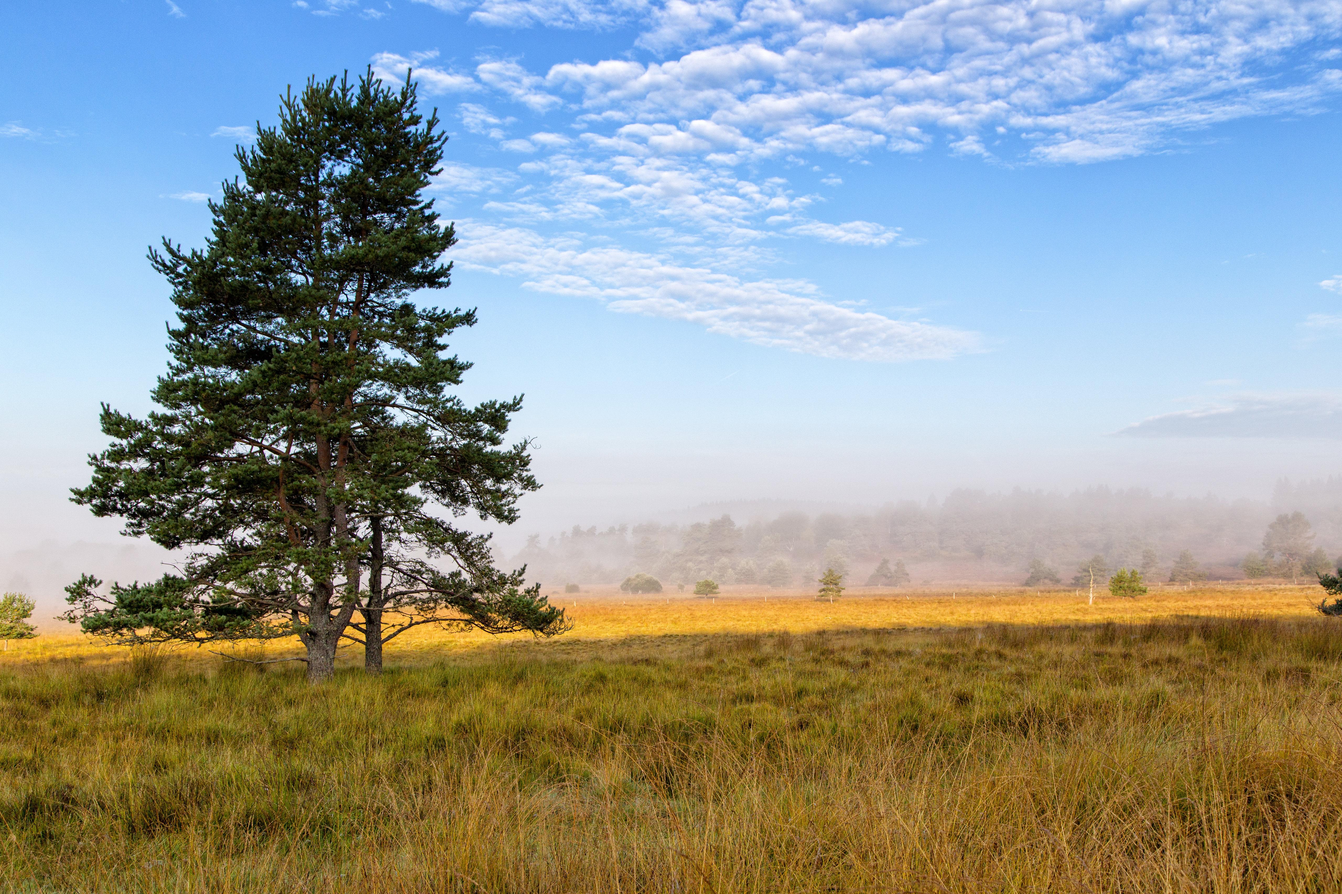 81673 скачать обои Природа, Дерево, Ветки, Ель, Поле, Трава - заставки и картинки бесплатно