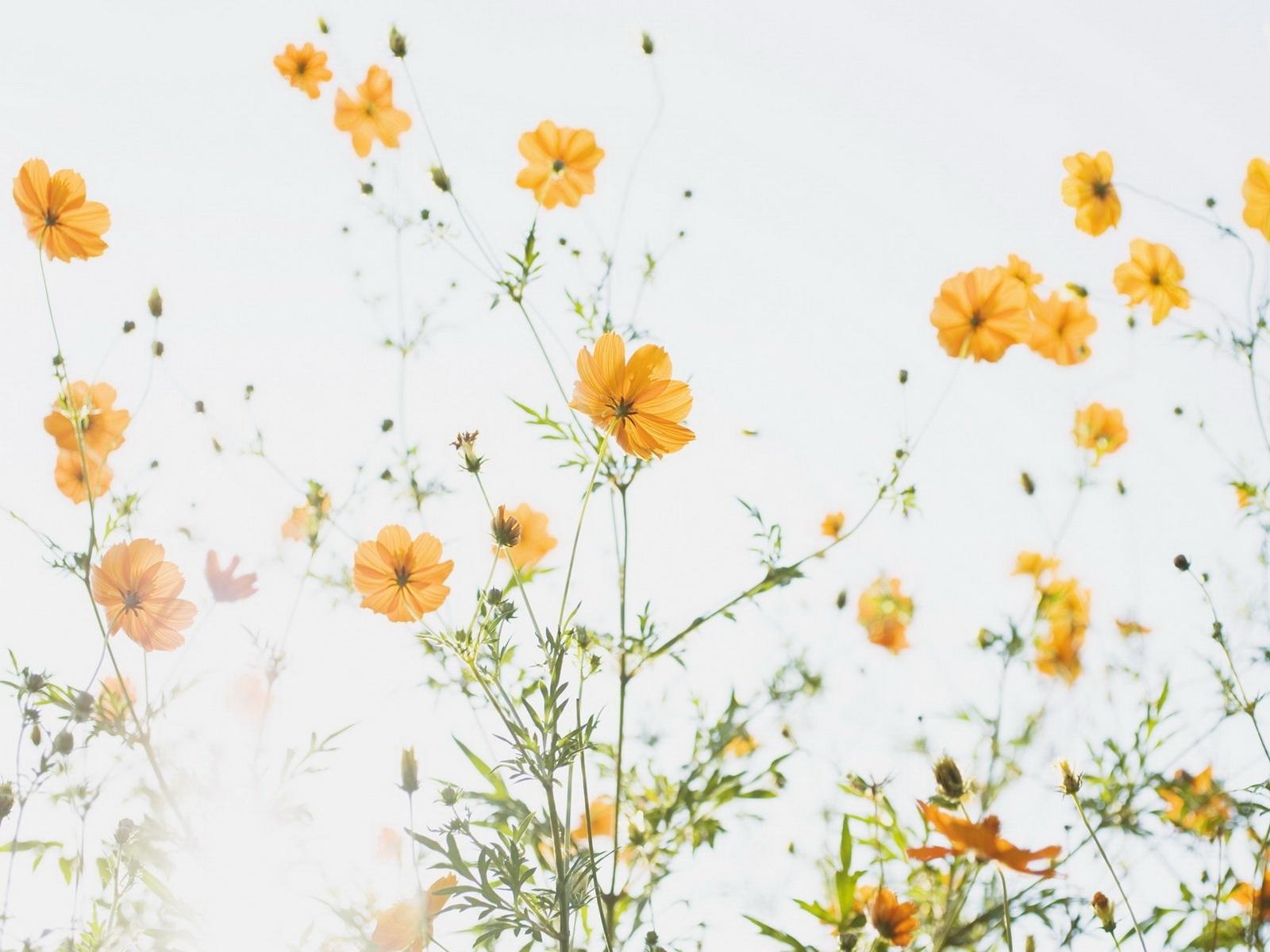 1074 скачать Белые обои на телефон бесплатно, Растения, Цветы Белые картинки и заставки на мобильный