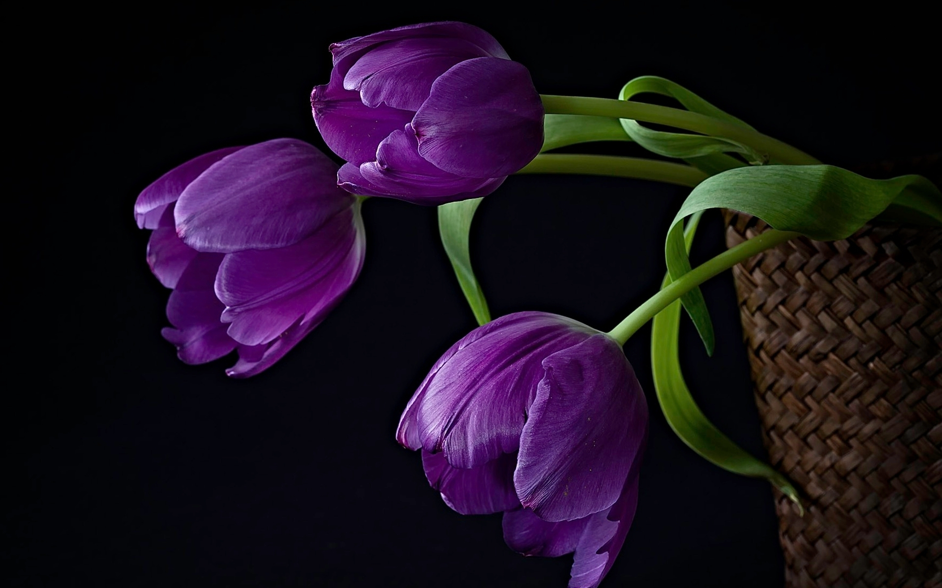 35791 Hintergrundbild herunterladen Tulpen, Pflanzen, Blumen - Bildschirmschoner und Bilder kostenlos
