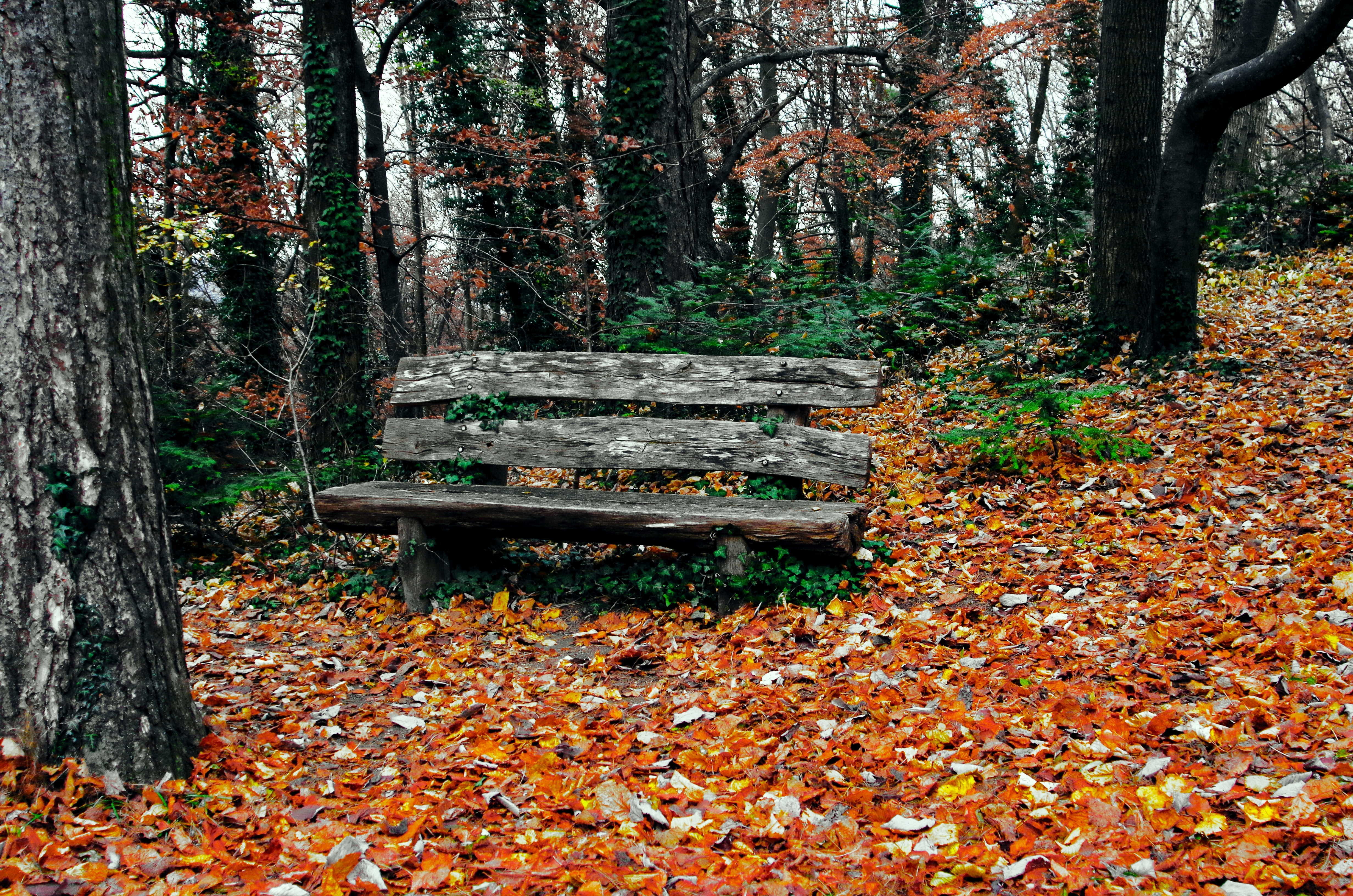 133824 Screensavers and Wallpapers Bench for phone. Download Nature, Trees, Autumn, Park, Bench pictures for free