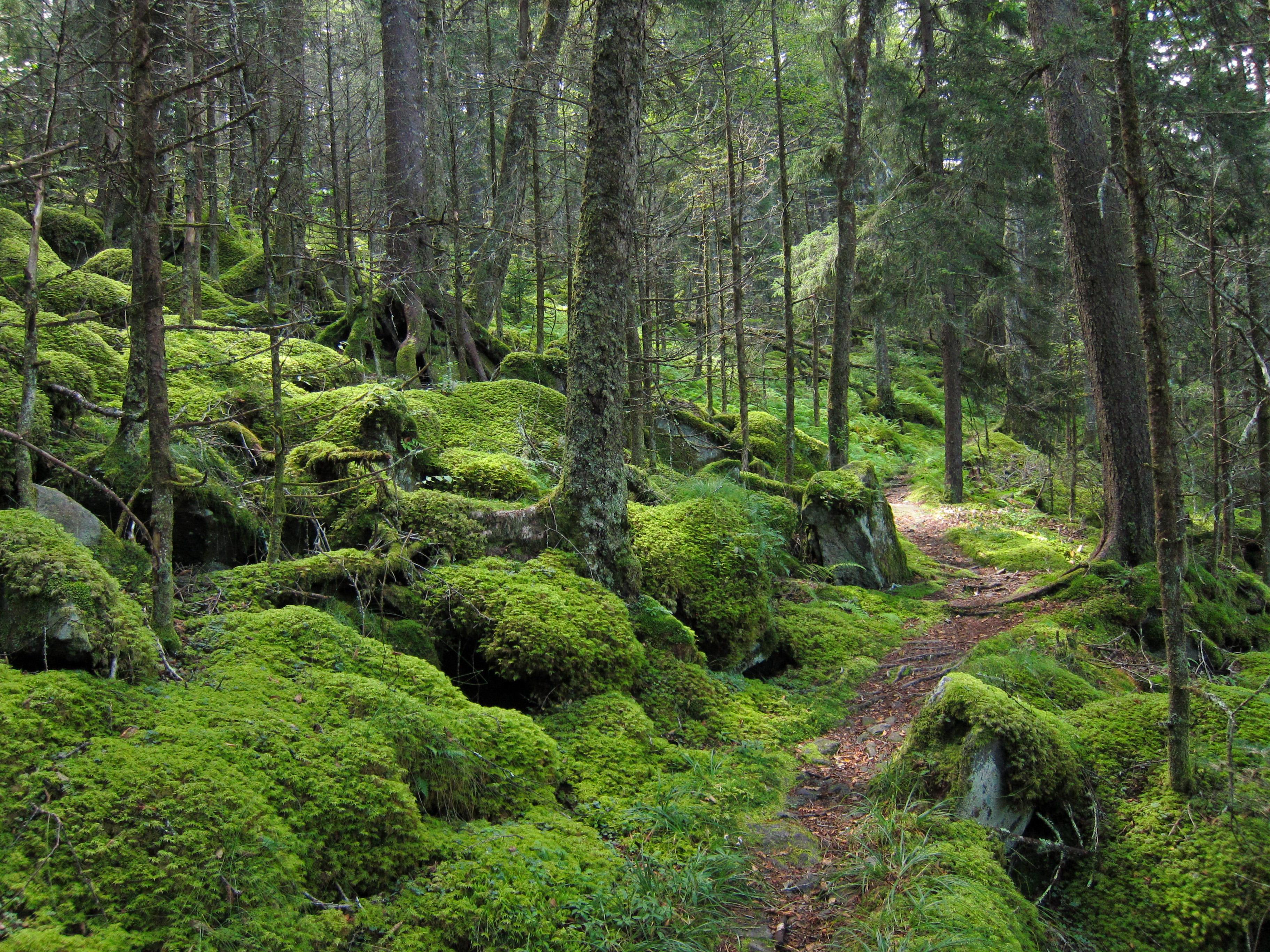 139539 descargar fondo de pantalla Bosque, Naturaleza, Árboles, Camino, Musgo: protectores de pantalla e imágenes gratis
