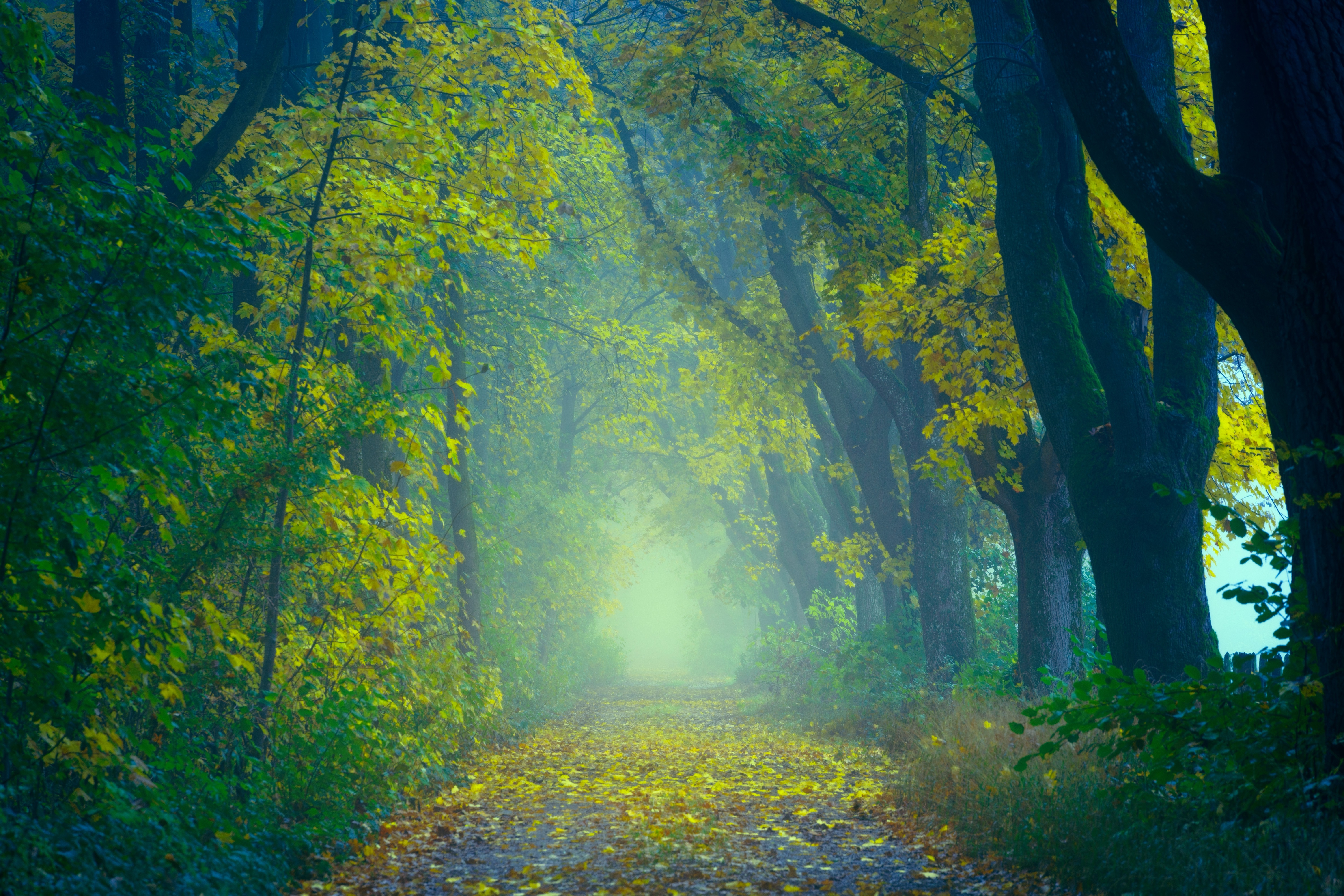 140654 download wallpaper Nature, Autumn, Forest, Fog, Blur, Smooth, Path, Foliage screensavers and pictures for free