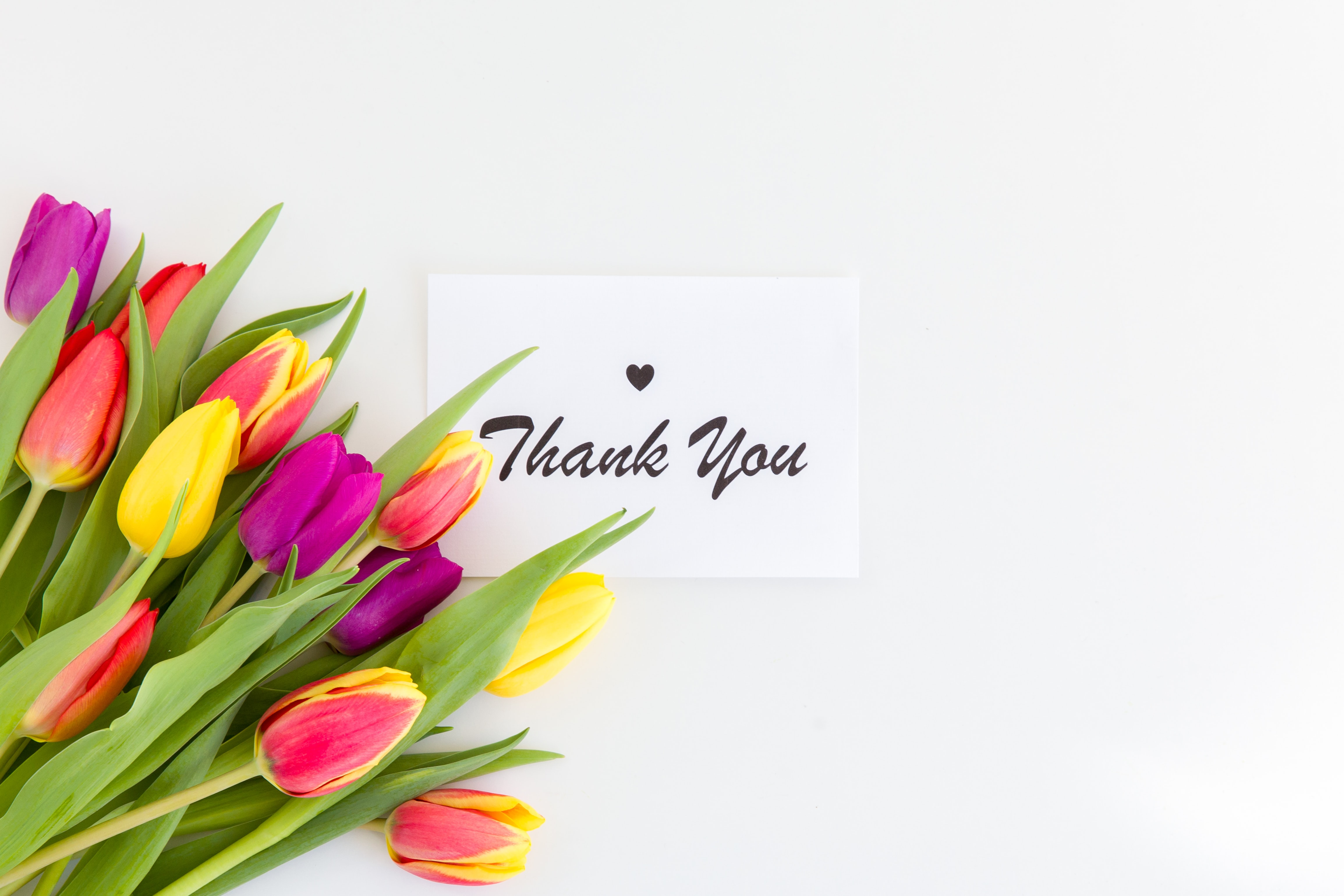 139815 descargar fondo de pantalla Las Palabras, Palabras, Gracias, Inscripción, Flores, Tulipanes: protectores de pantalla e imágenes gratis