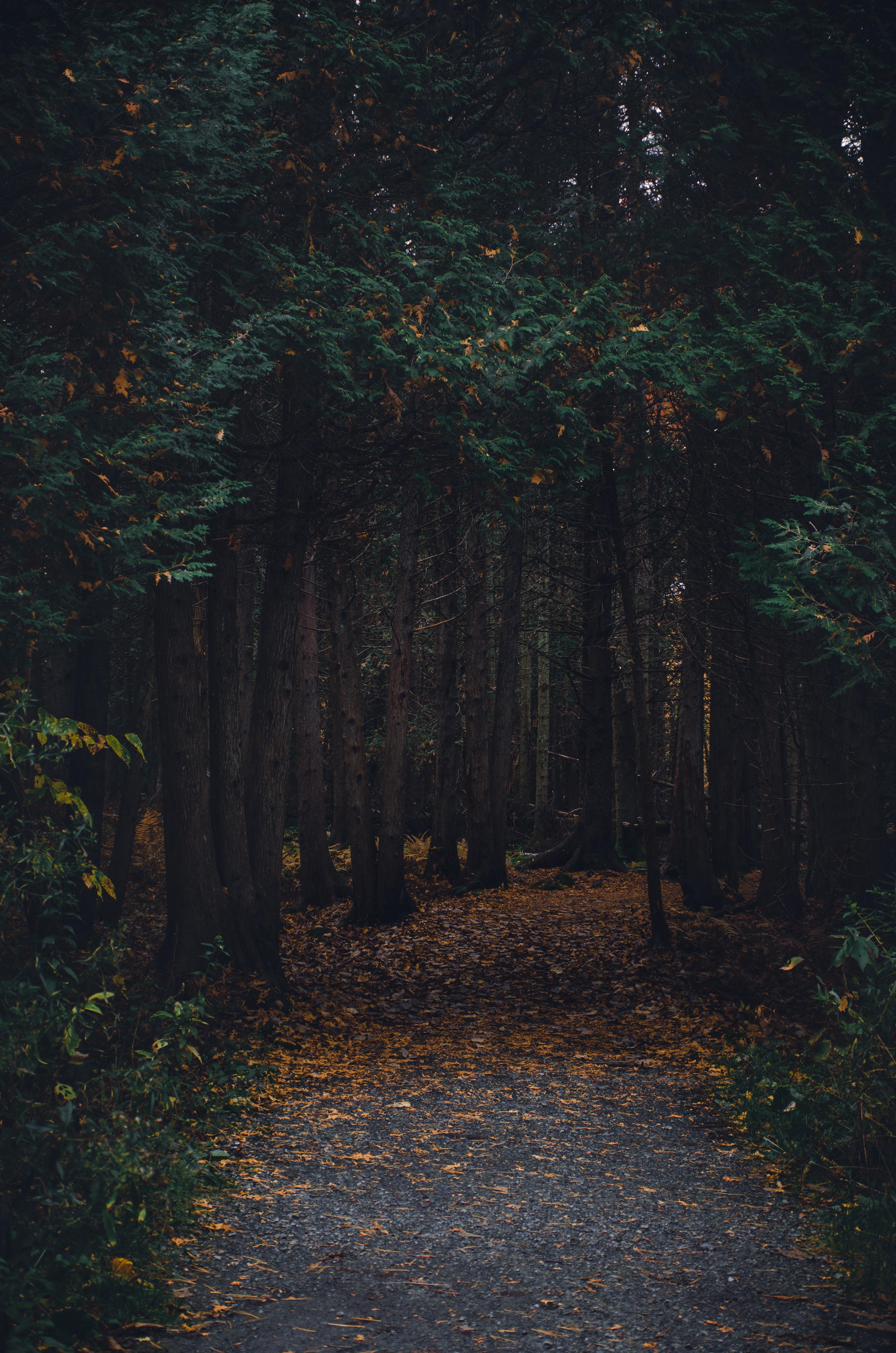 129754 скачать обои Лес, Прогулка, Осень, Природа, Деревья, Тропинка - заставки и картинки бесплатно