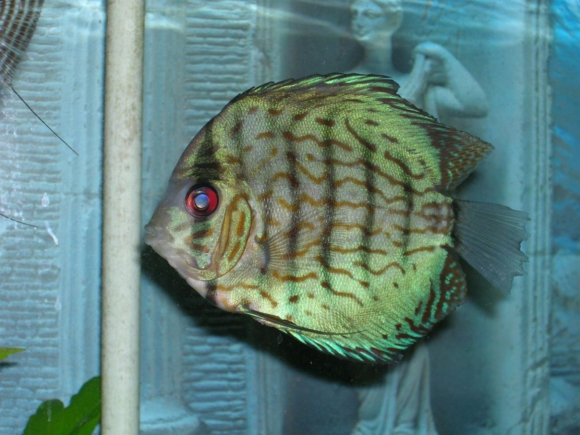 23913 download wallpaper Animals, Aquariums, Fishes screensavers and pictures for free
