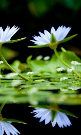 46892 baixar papel de parede Plantas, Flores - protetores de tela e imagens gratuitamente