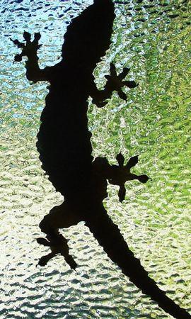31492 baixar papel de parede Animais, Crocodiles - protetores de tela e imagens gratuitamente