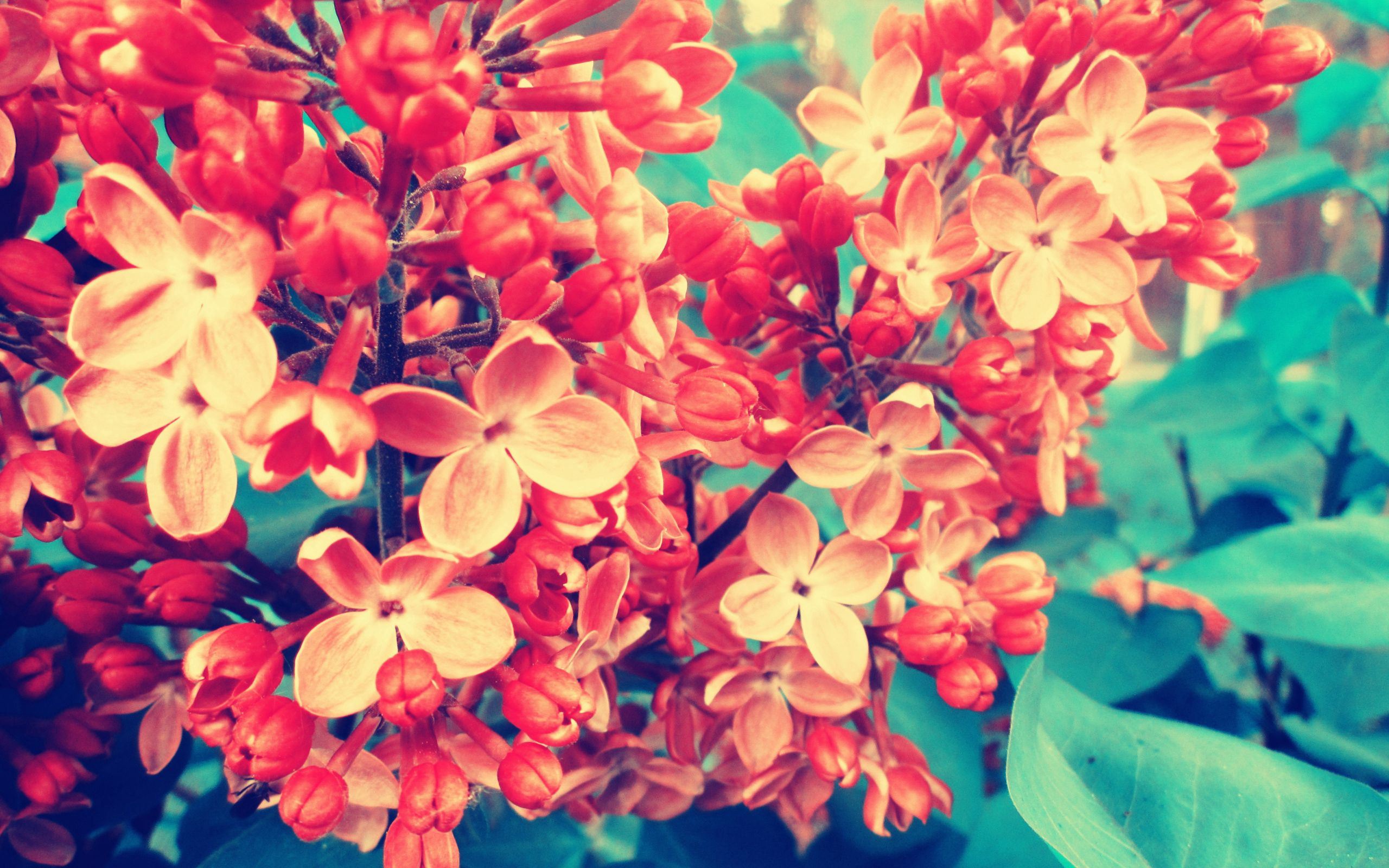 71055 Screensavers and Wallpapers Lilac for phone. Download Flowers, Lilac, Macro, Branch pictures for free