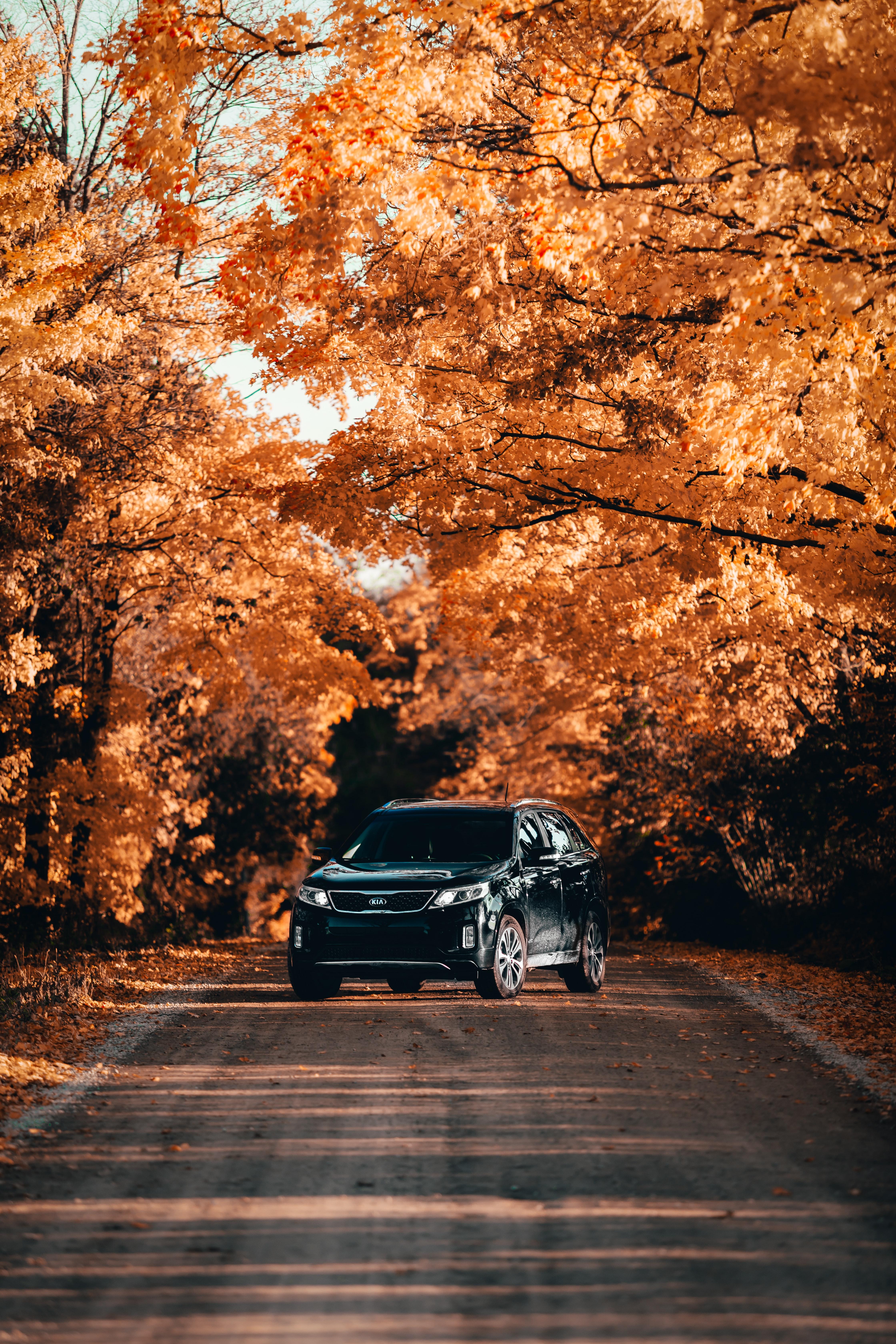 83654 Hintergrundbild herunterladen Auto, Kia, Cars, Straße, Wagen, Das Schwarze, Vorderansicht, Frontansicht - Bildschirmschoner und Bilder kostenlos