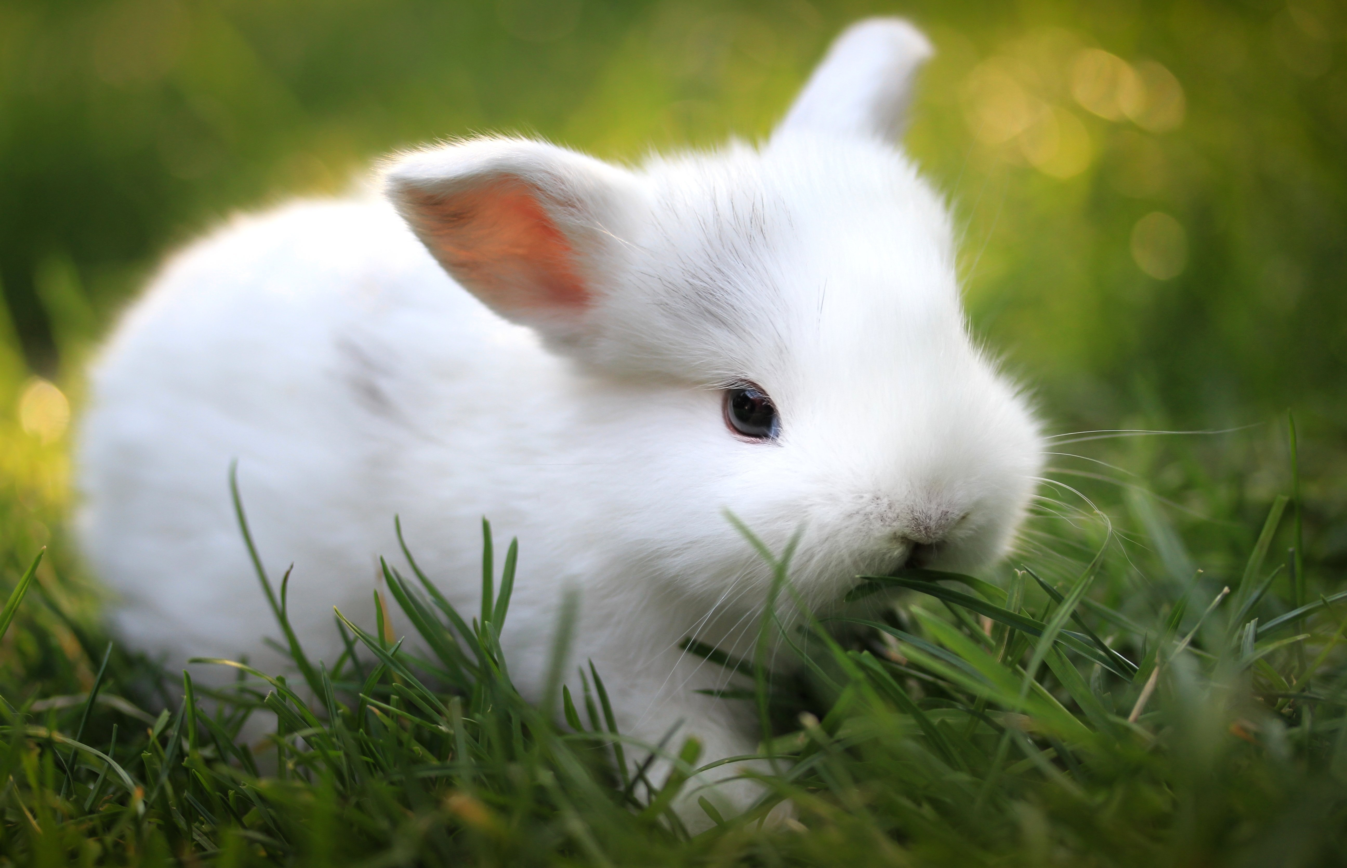 70492 Screensavers and Wallpapers Nice for phone. Download Animals, Food, Grass, Nice, Sweetheart, Rabbit pictures for free