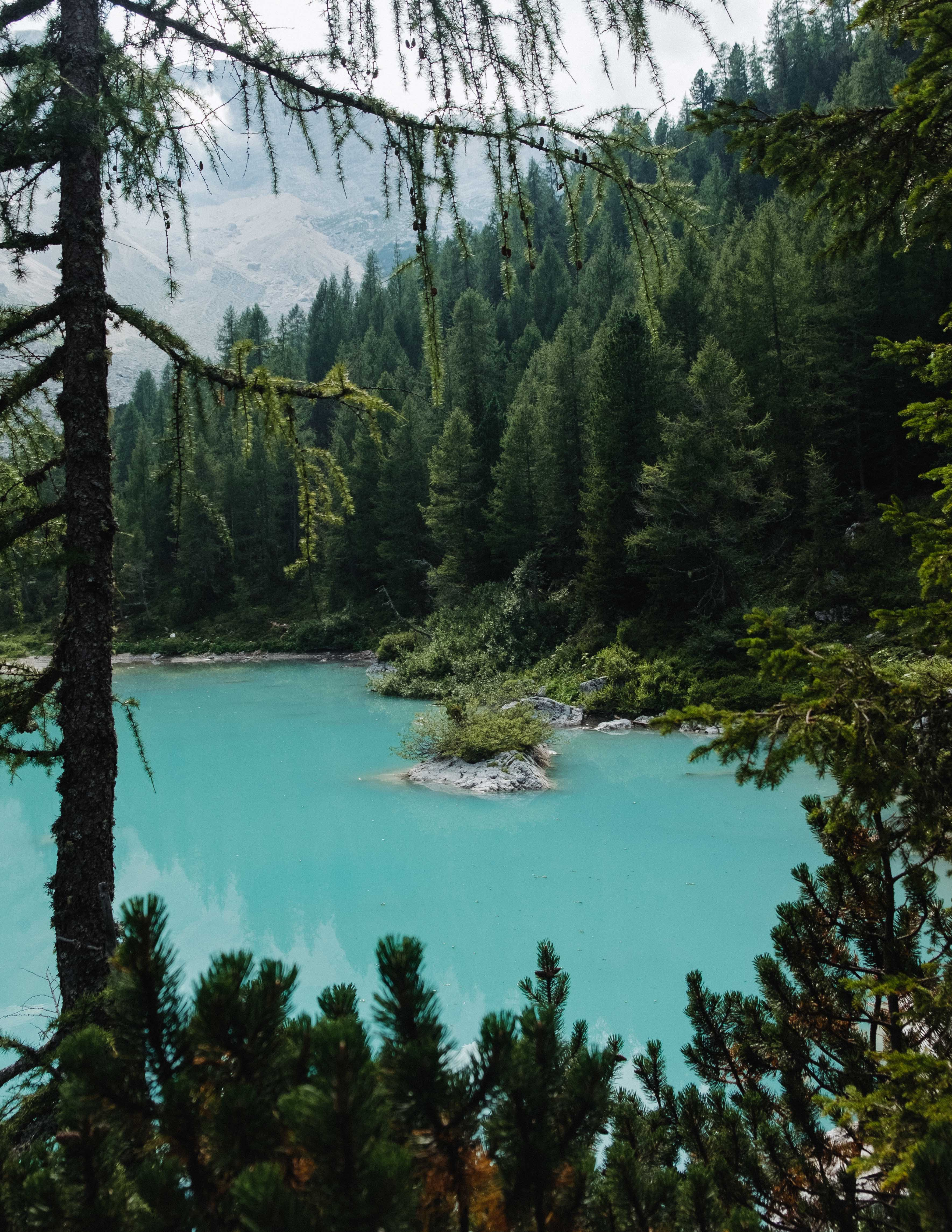 146205 download wallpaper Nature, Trees, Lake, Shore, Bank, Coniferous, Forest screensavers and pictures for free