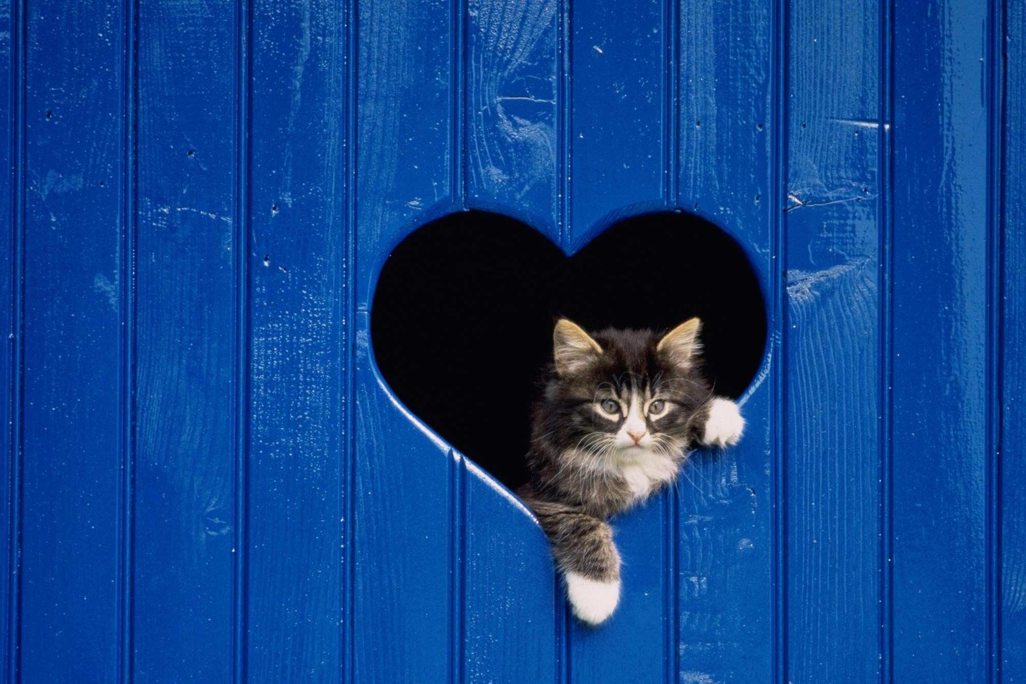 67330 download wallpaper Animals, Cat, Peek Out, Look Out, Door, Heart, Wood, Wooden screensavers and pictures for free
