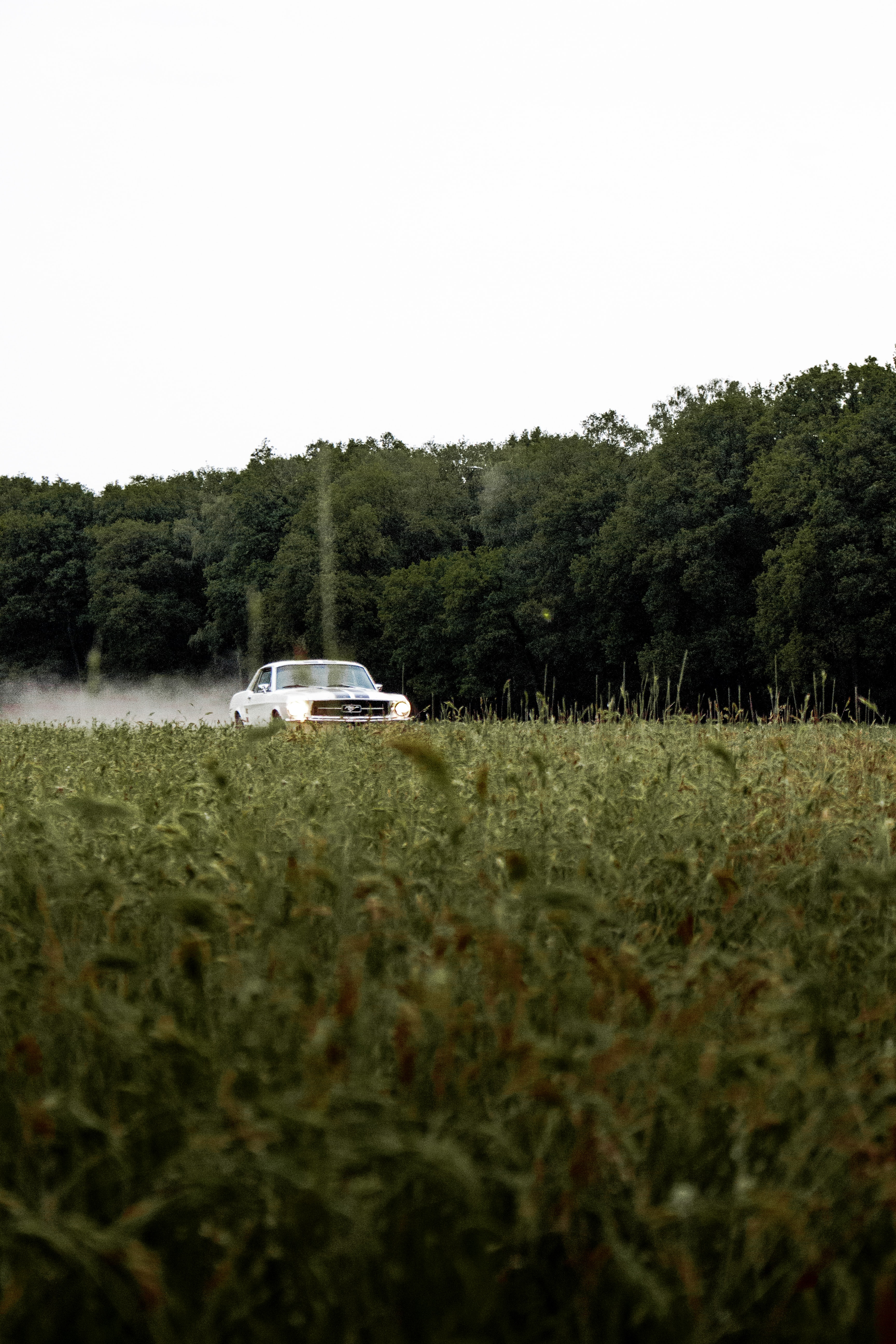 147566 скачать обои Тачки (Cars), Мустанг (Mustang), Автомобиль, Ретро, Винтаж, Трава, Деревья - заставки и картинки бесплатно