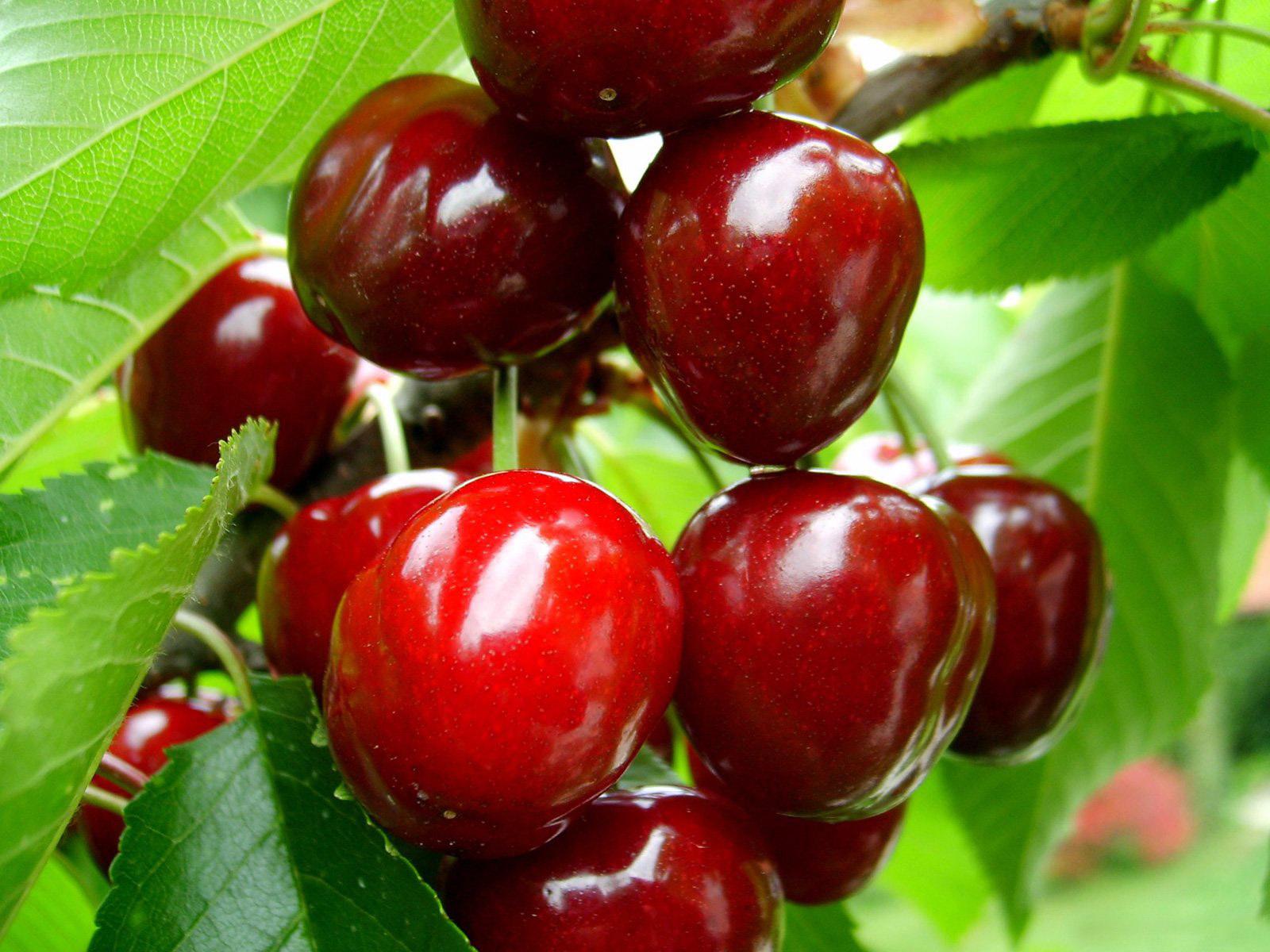 Handy-Wallpaper Obst, Kirsche, Lebensmittel, Berries kostenlos herunterladen.