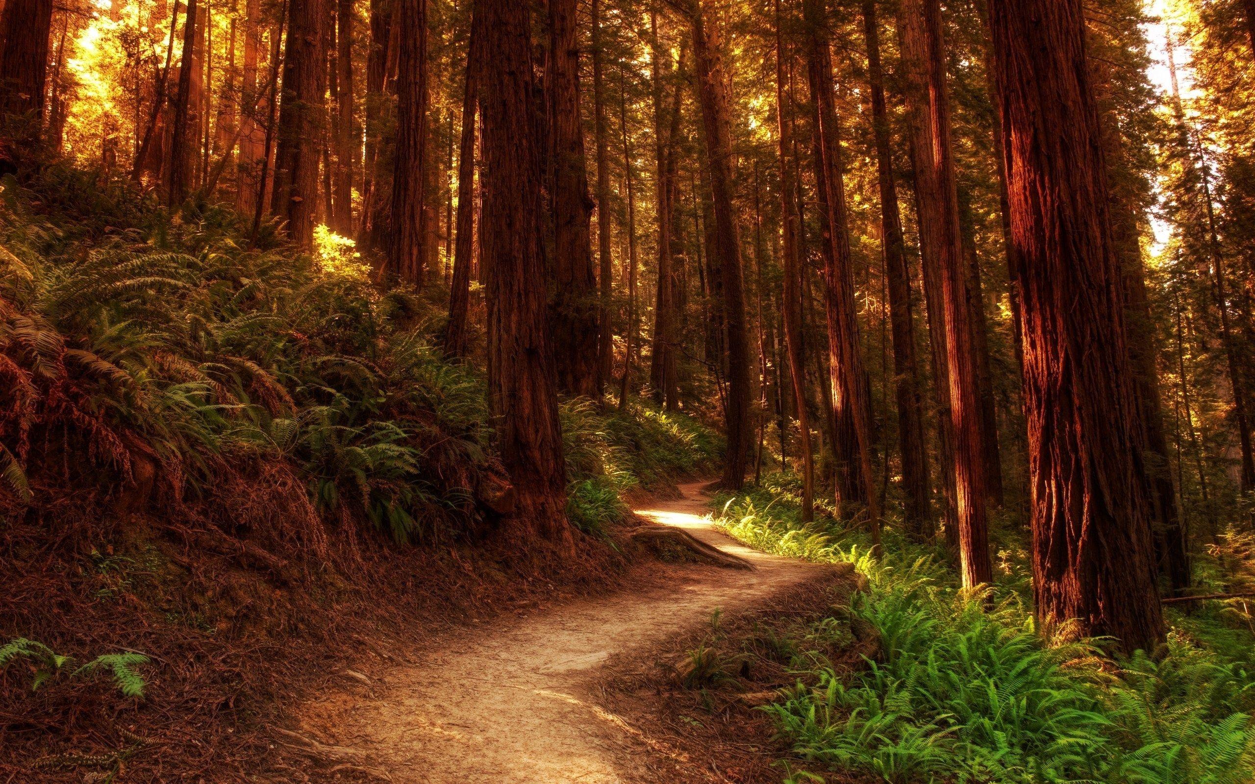 143767 Hintergrundbild herunterladen Natur, Bäume, Farne, Wald, Farbe, Pfad, Farben, Koffer, Trunks, Weg - Bildschirmschoner und Bilder kostenlos