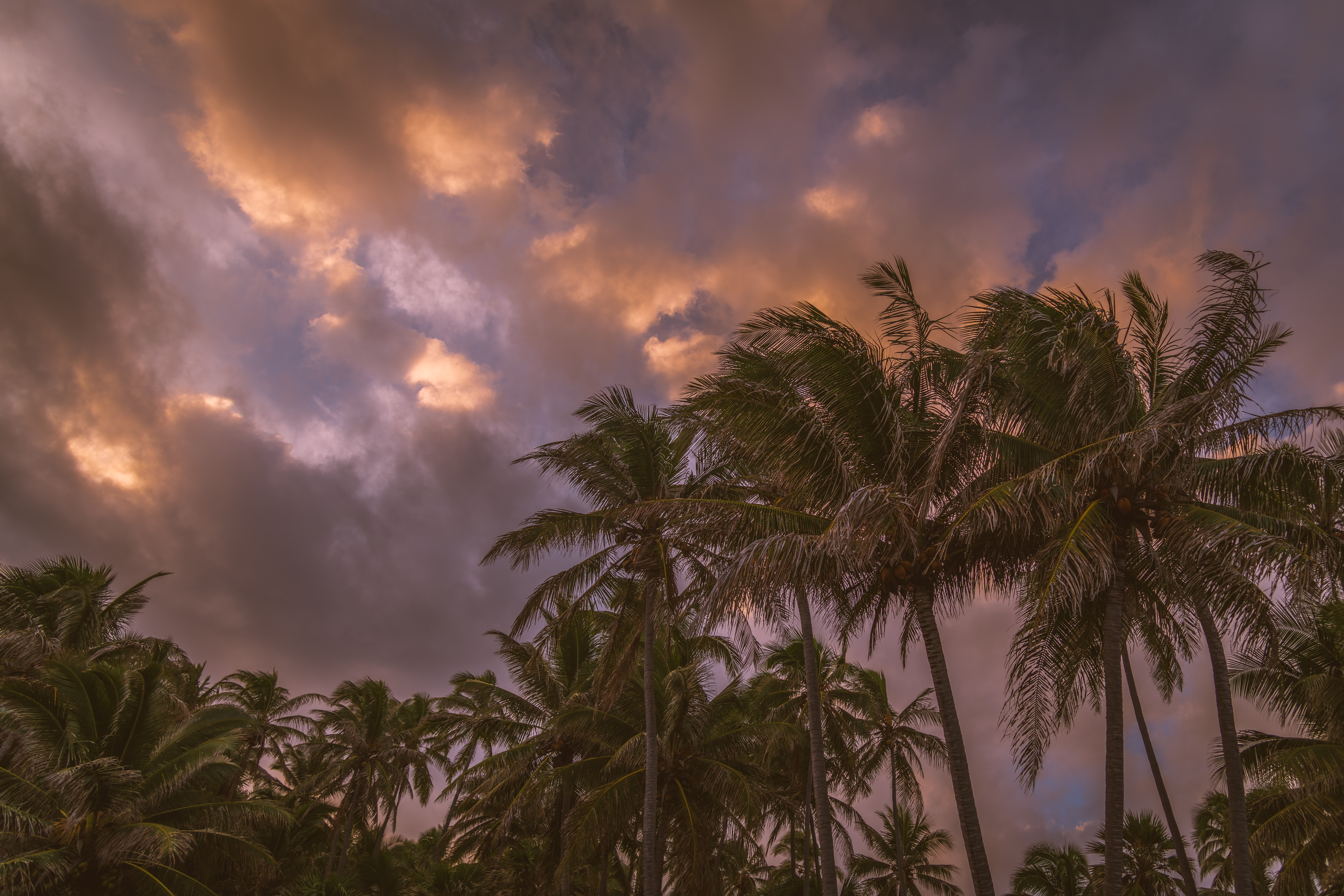 154068 download wallpaper Nature, Sky, Clouds, Tropics, Palms screensavers and pictures for free