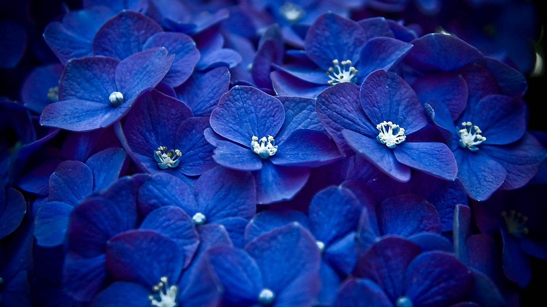 141314 завантажити шпалери Квіти, Пелюстки, Синій - заставки і картинки безкоштовно
