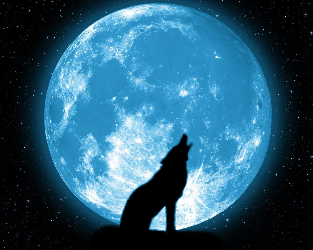 20181 download wallpaper Animals, Wolfs, Night, Moon screensavers and pictures for free