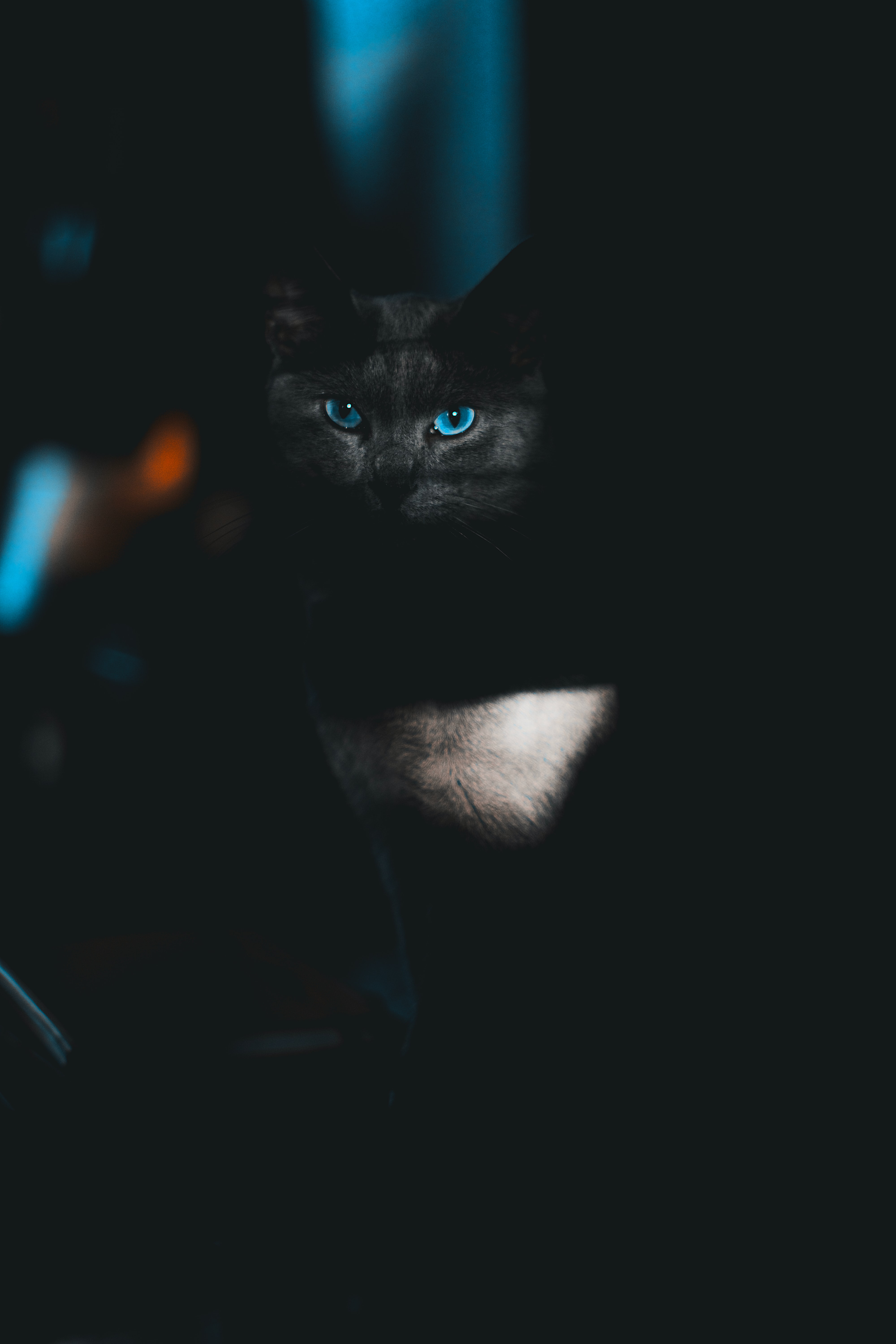 79686 download wallpaper Animals, Cat, Sight, Opinion, Pet, Dark, Eyes screensavers and pictures for free