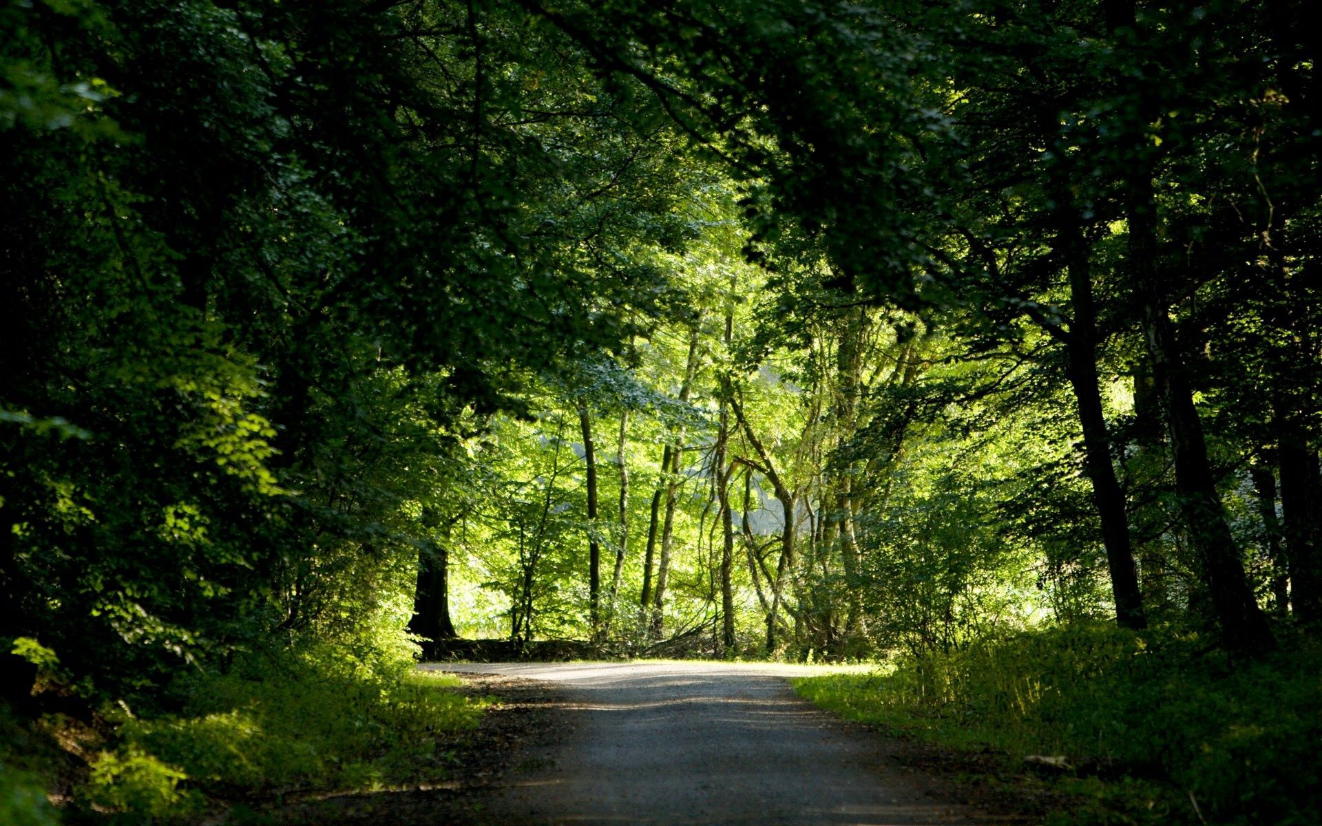 60415 download wallpaper Forest, Nature, Trees, Summer, Road, Greens, Crossroads, Crossroad screensavers and pictures for free