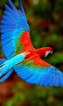 28484 baixar papel de parede Animais, Aves, Papagaios - protetores de tela e imagens gratuitamente