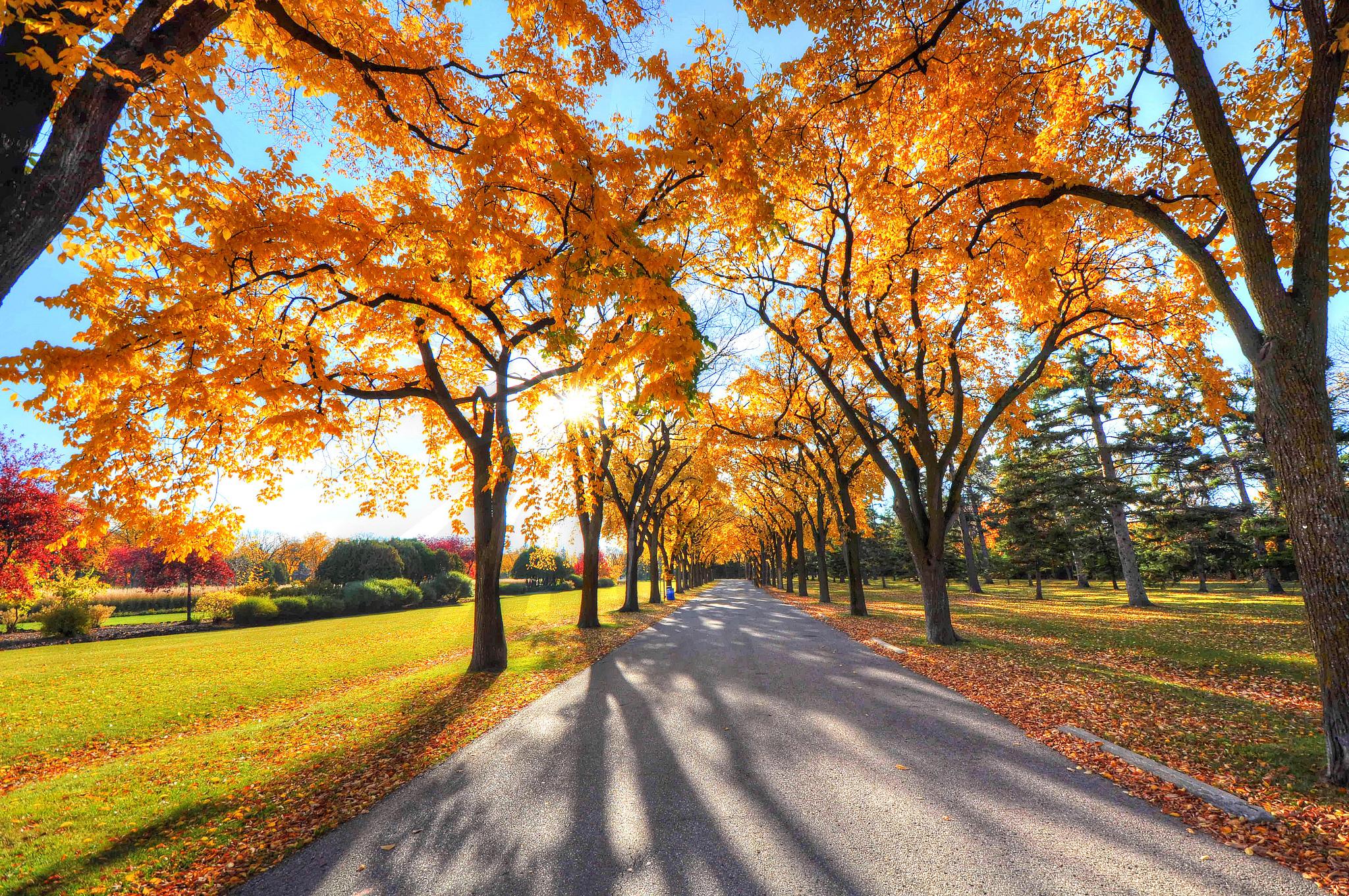 133455 завантажити шпалери Осінь, Природа, Дерева, Парк, Алея, Алеї - заставки і картинки безкоштовно