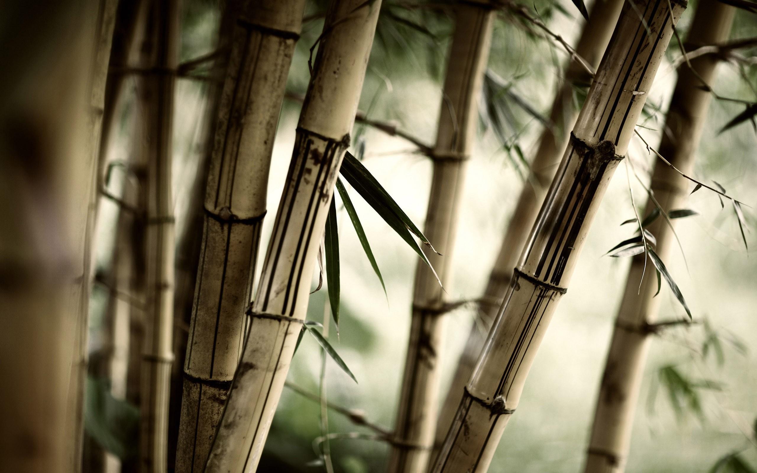 17281 скачать обои Растения, Деревья, Азия - заставки и картинки бесплатно