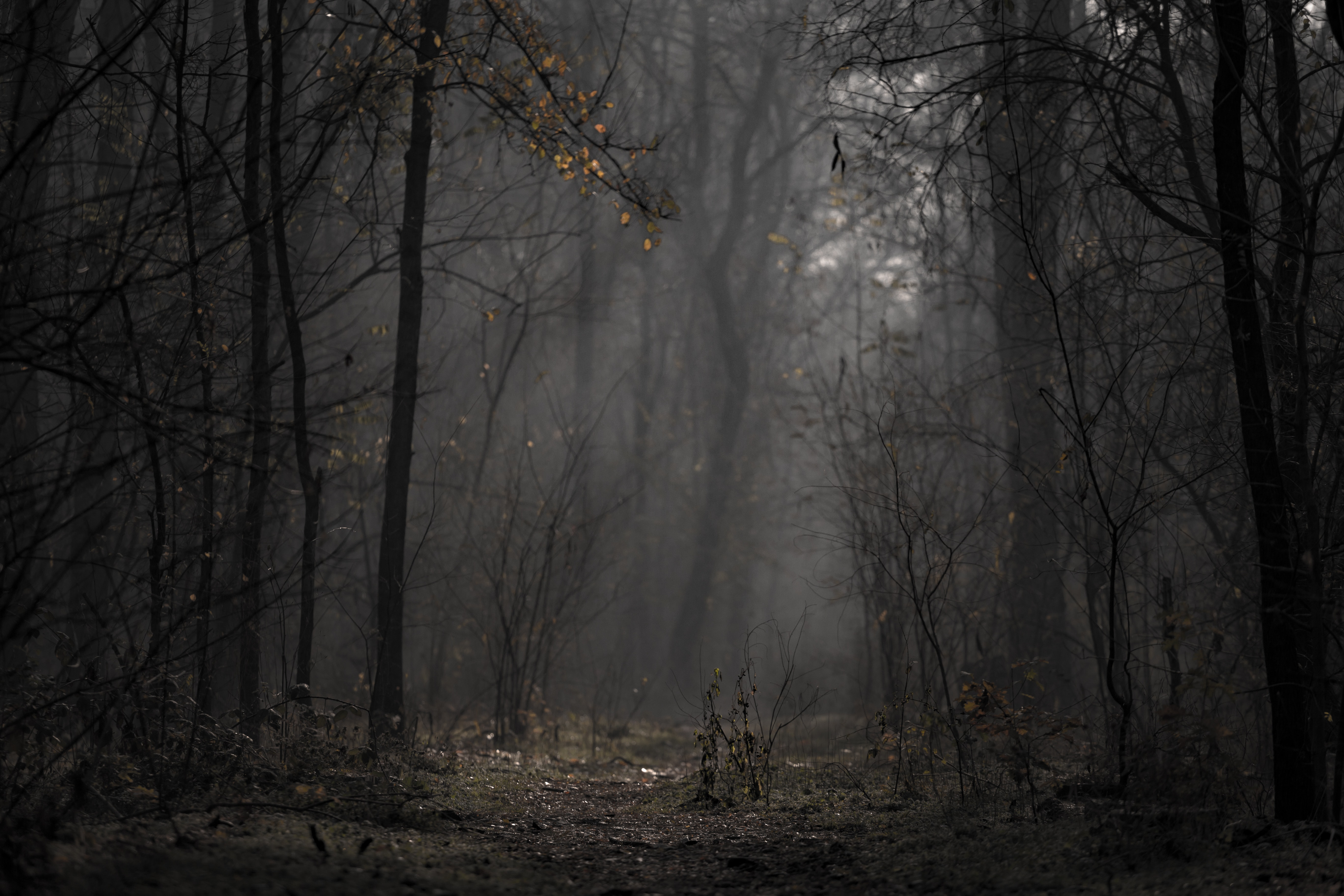 56100 download wallpaper Nature, Forest, Fog, Trees, Branches, Autumn screensavers and pictures for free