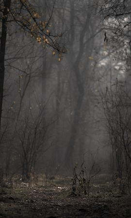 56100 скачать обои Природа, Лес, Туман, Деревья, Ветки, Осень - заставки и картинки бесплатно