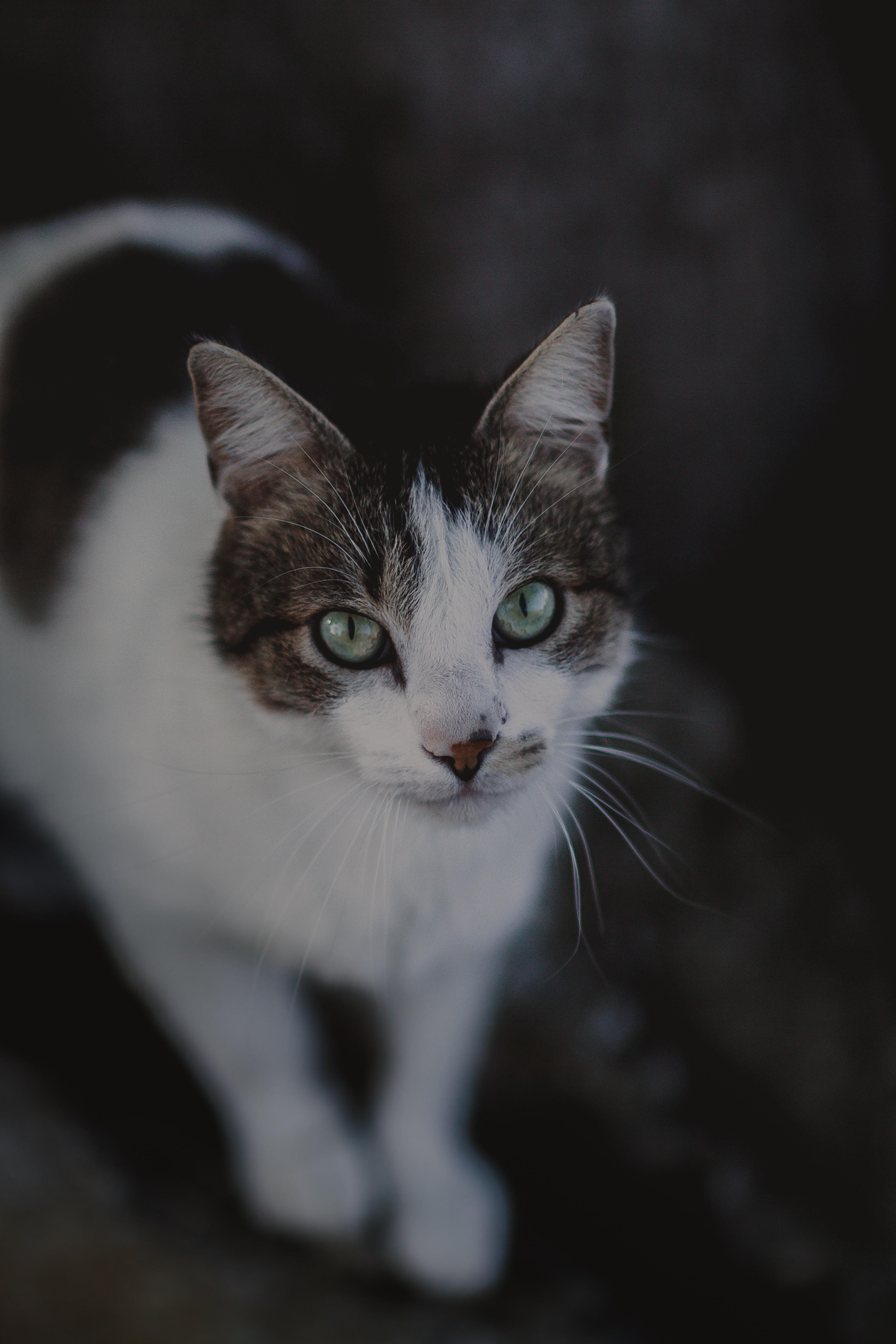 68406 download wallpaper Animals, Cat, Muzzle, Sight, Opinion, Spotted, Spotty, Blur, Smooth screensavers and pictures for free
