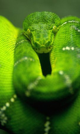 19401 download wallpaper Animals, Snakes screensavers and pictures for free