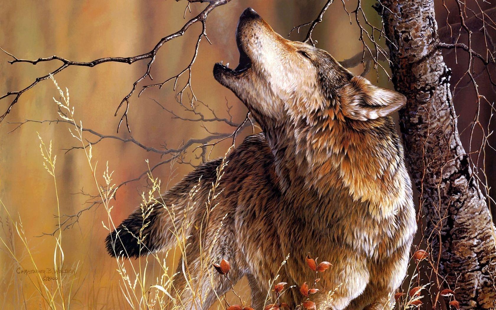 27660 Заставки и Обои Волки на телефон. Скачать Животные, Волки картинки бесплатно