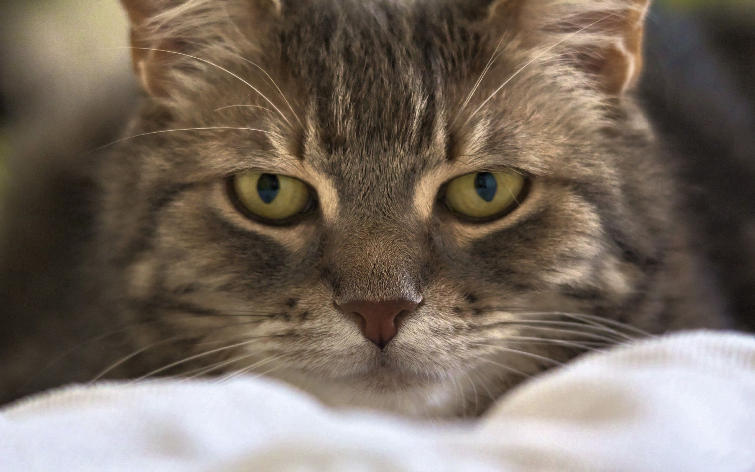 128804 download wallpaper Animals, Cat, Muzzle, Eyes, Fluffy screensavers and pictures for free