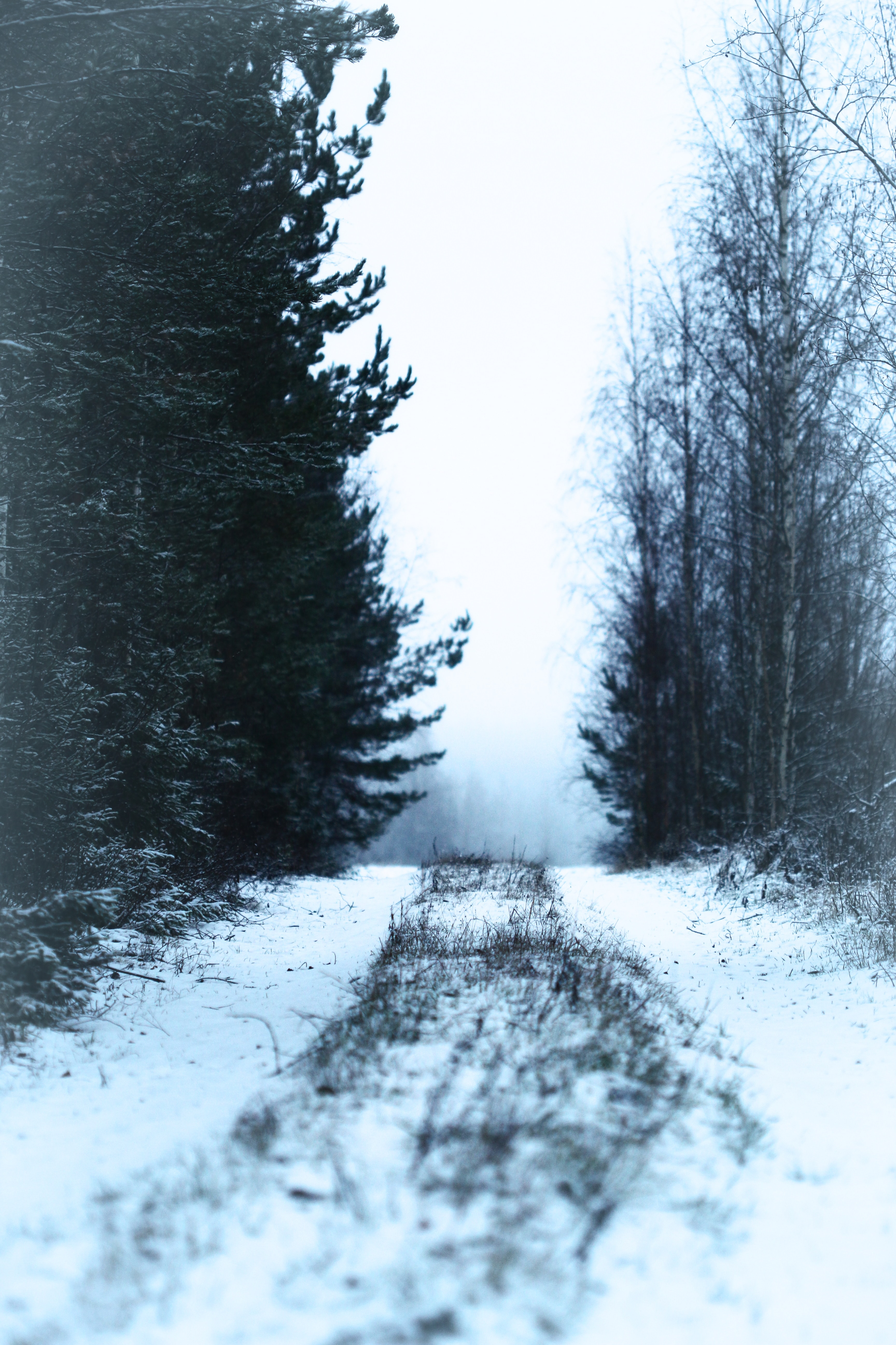 142921 download wallpaper Nature, Road, Forest, Snow, Fog, Winter screensavers and pictures for free