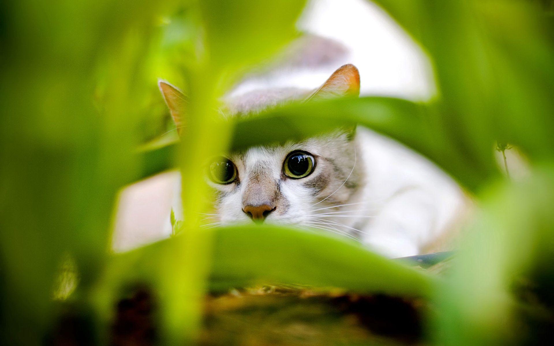 100585 скачать обои Животные, Кот, Серый, Белый, Трава, Охота - заставки и картинки бесплатно