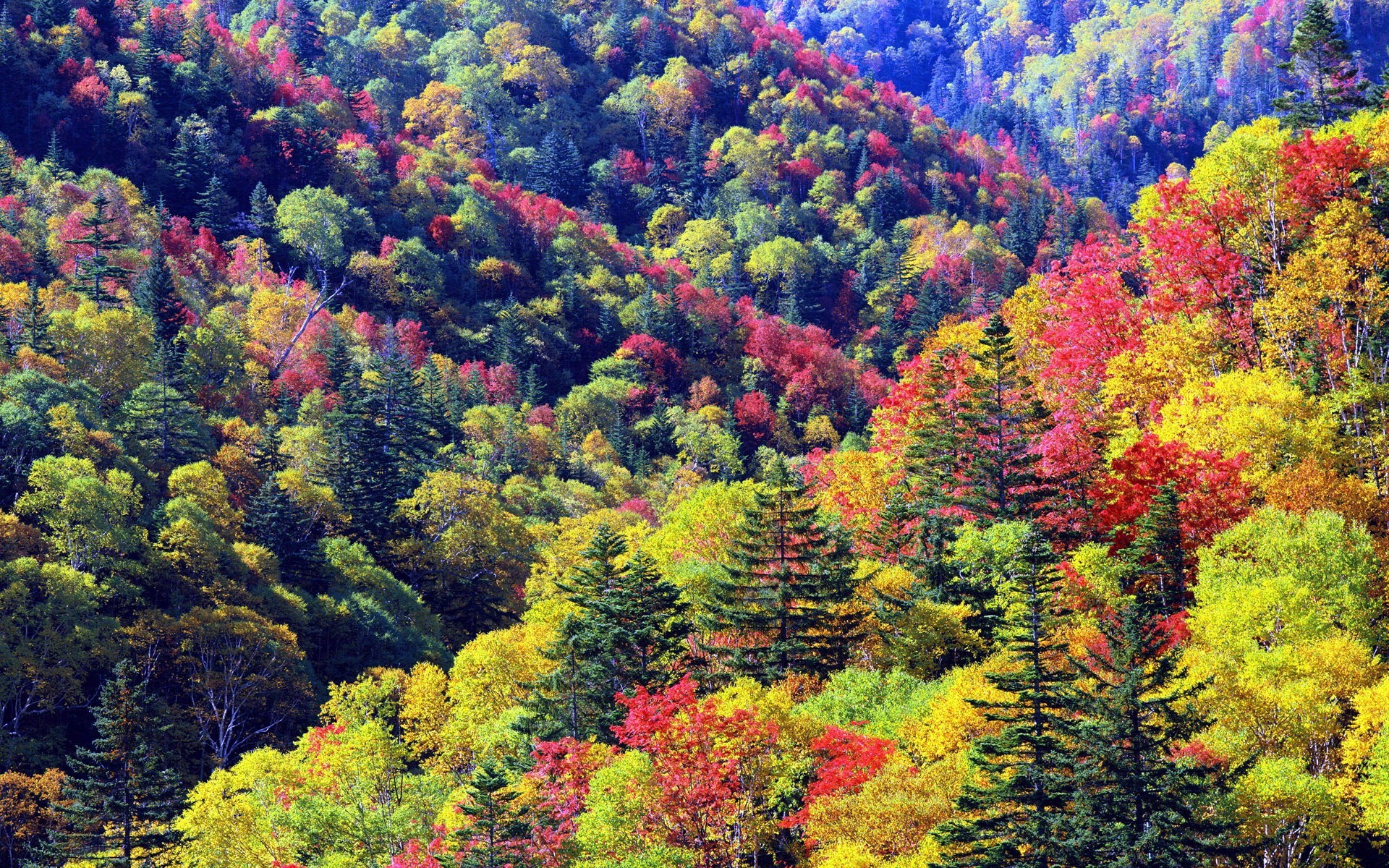 30923 download wallpaper Landscape, Trees, Autumn screensavers and pictures for free