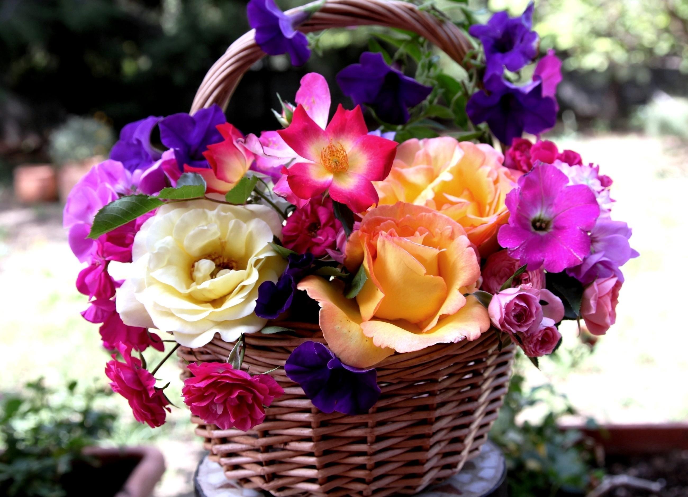105459 скачать обои Гвоздики, Цветы, Розы, Корзина, Петуния - заставки и картинки бесплатно