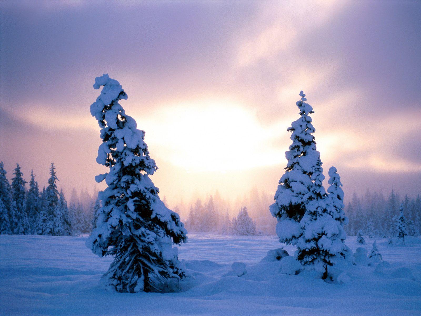 19618 скачать обои Пейзаж, Зима, Закат, Снег, Елки - заставки и картинки бесплатно