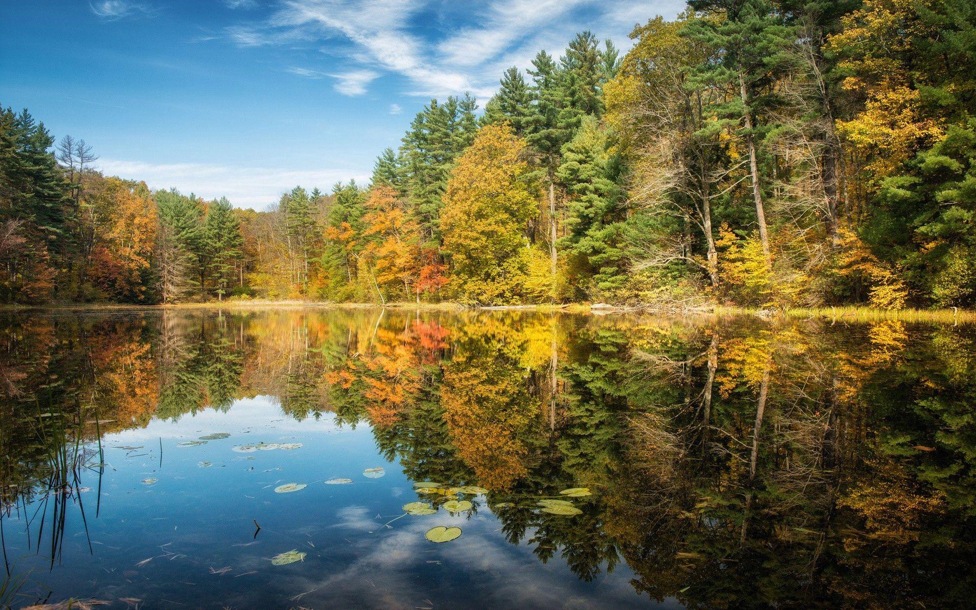 71331 скачать обои Природа, Деревья, Осень, Лето, Река - заставки и картинки бесплатно