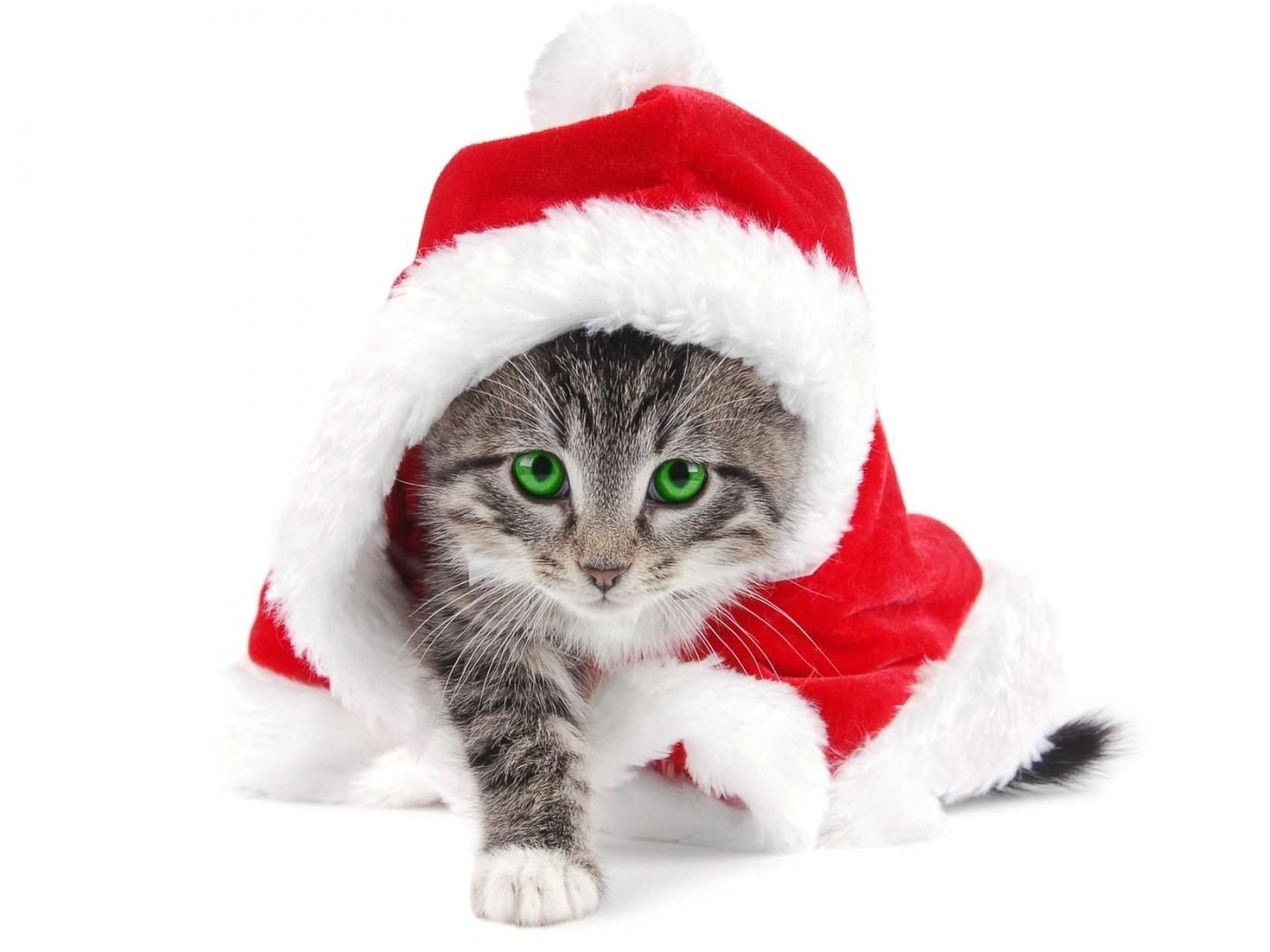 49467 Заставки и Обои Кошки (Коты, Котики) на телефон. Скачать Кошки (Коты, Котики), Животные картинки бесплатно